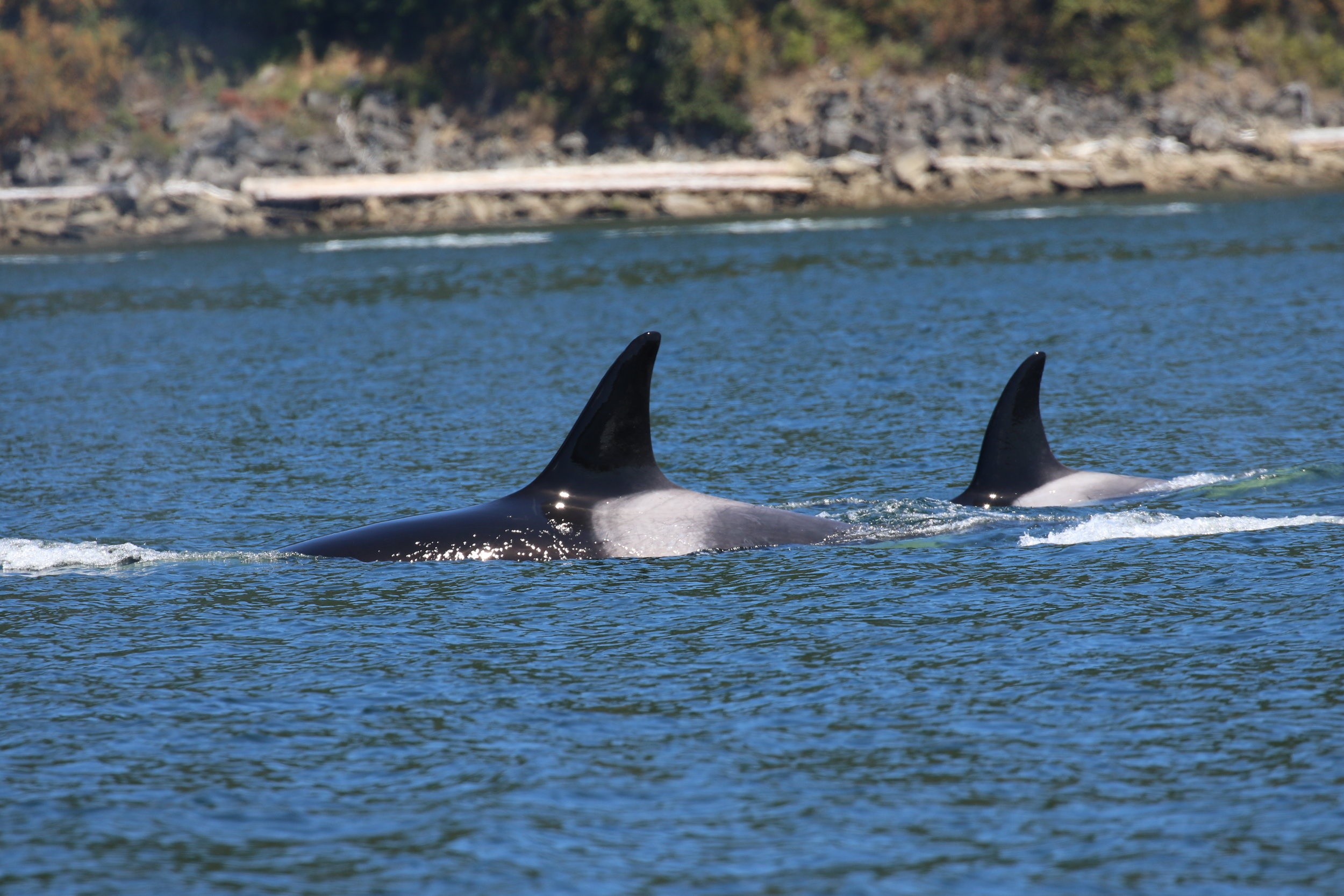 Kittiwake (T124A) and Wasini (T124A3). Photo by Cheyenne Brewster (10:30).