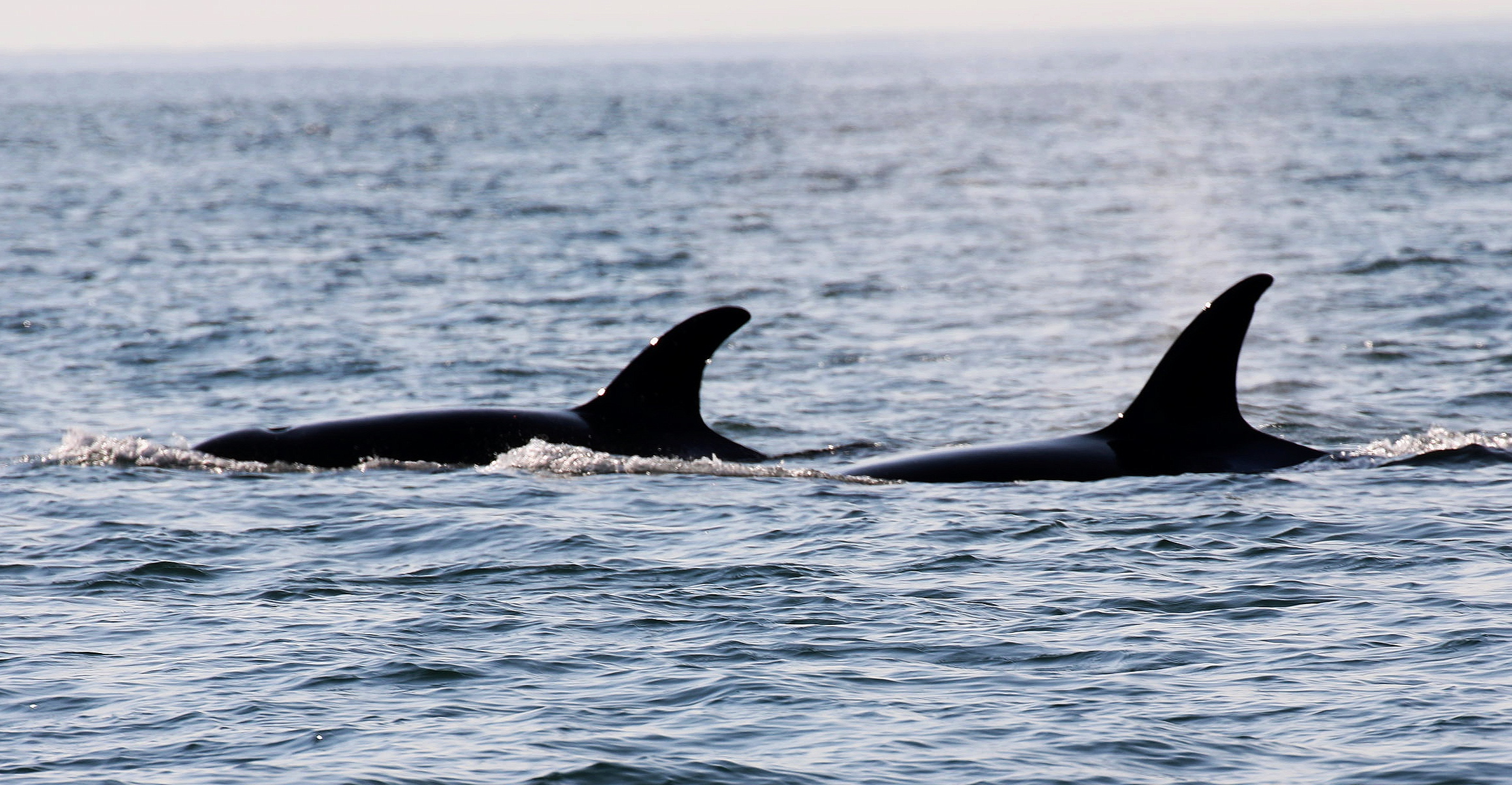 Ellifrit and her mom Fingers silhouetted in the evening sun. Photo by Ryan Uslu (3.30)