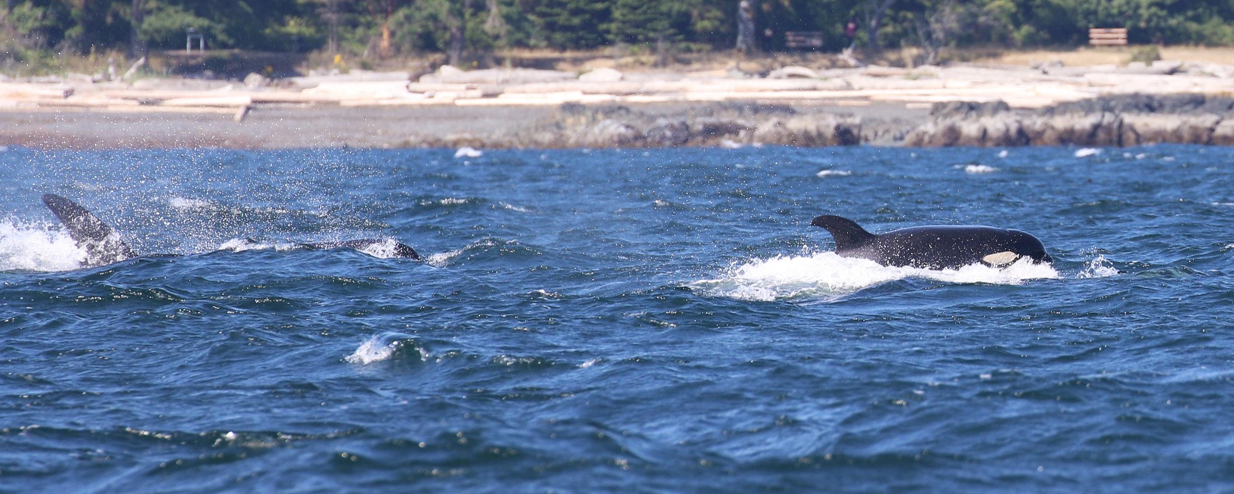 Crashing through the surf. Photo by Rebeka Pirker (10:30).