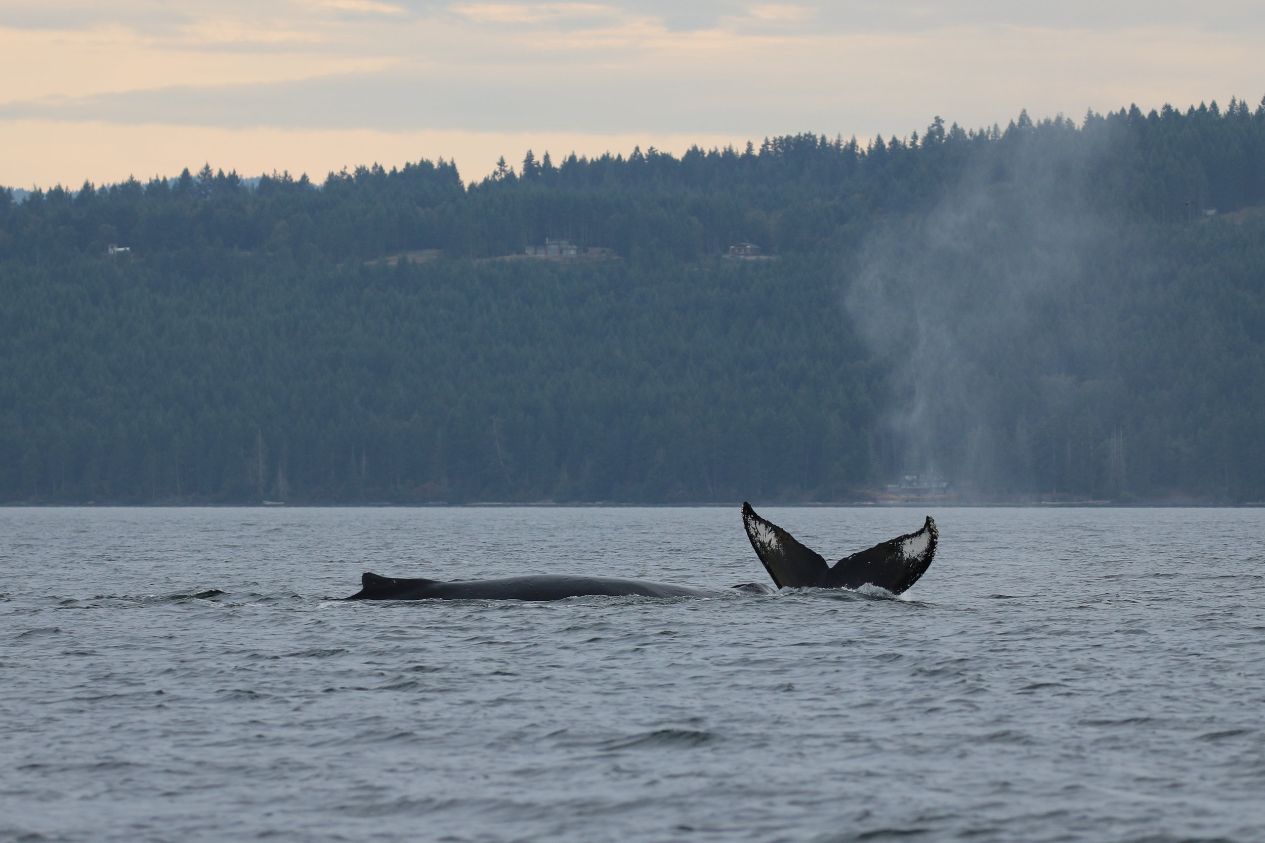 Heather (right) and Big Momma (left) at the surface together. Photo by Val Watson.