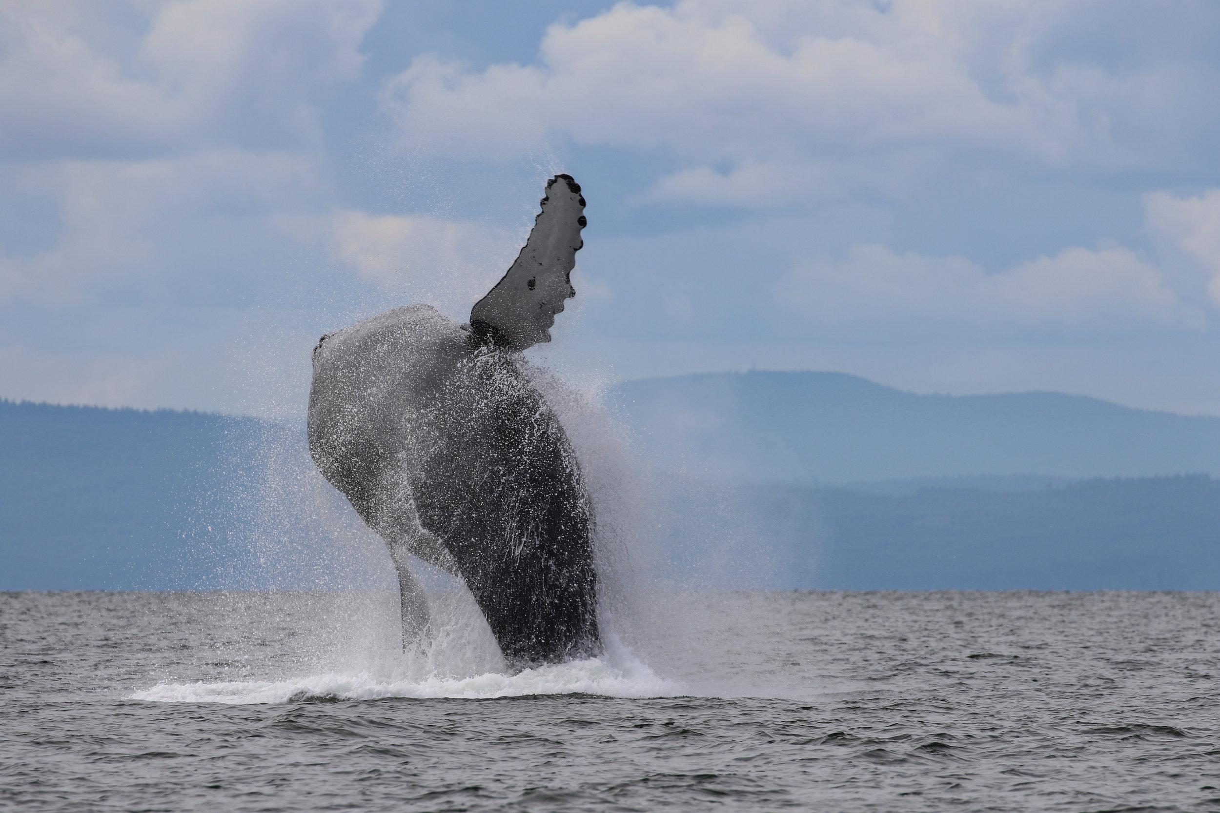Big breach! Photo by Val Watson.