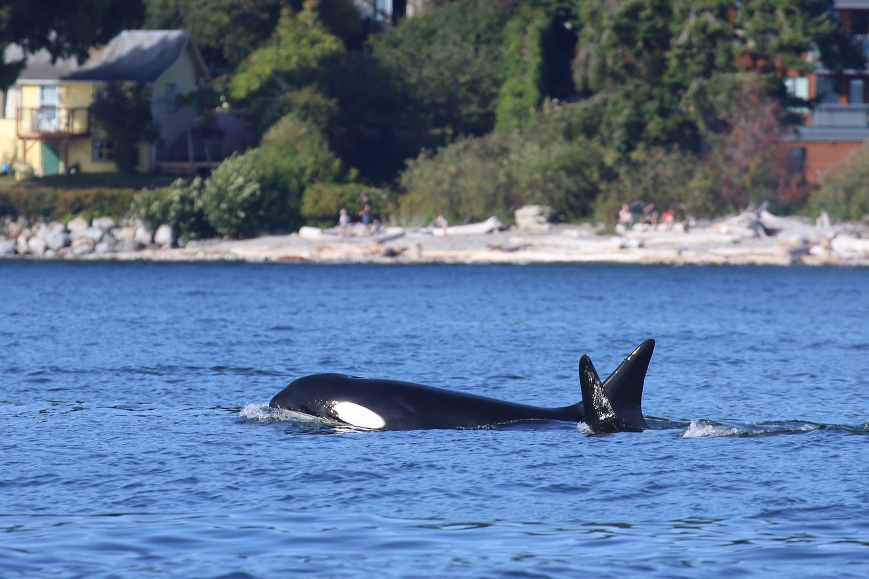 """T101 - """"Reef"""" with one of her sons right along side. Photo by Cheyenne Brewster (3:30)."""