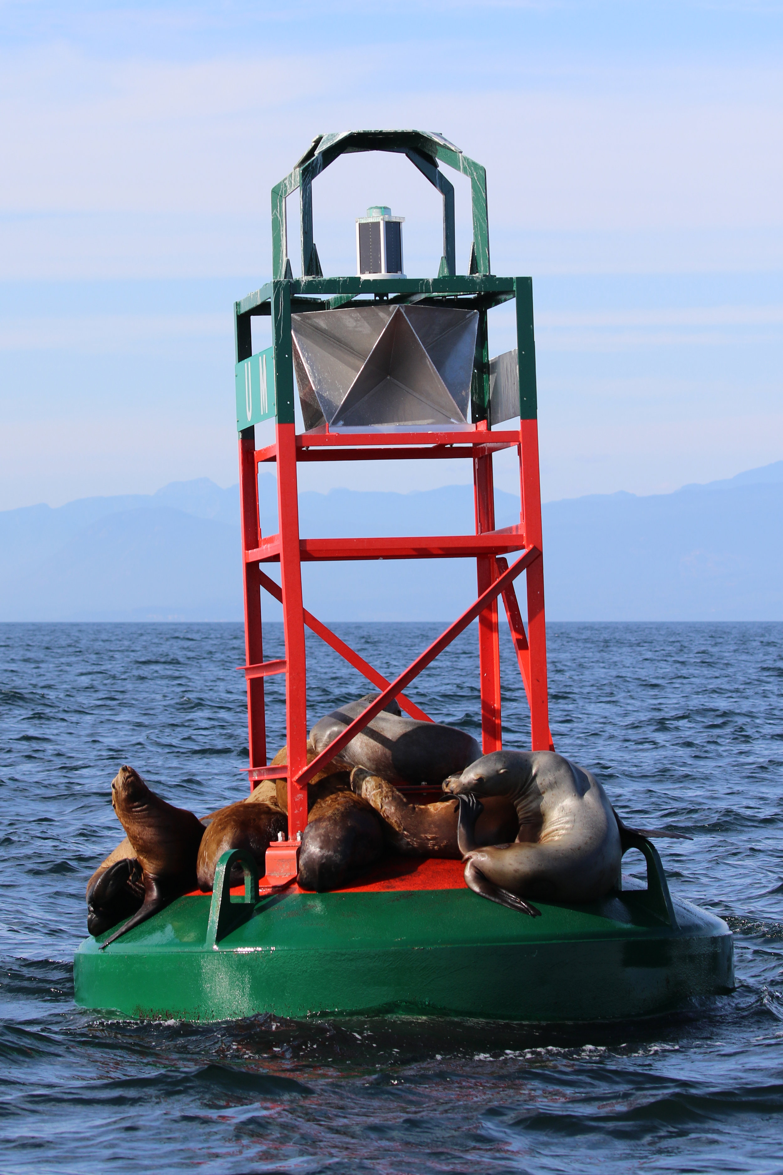 Our friendly neighbourhood Steller's Sea Lions! Photo by Ryan Uslu.