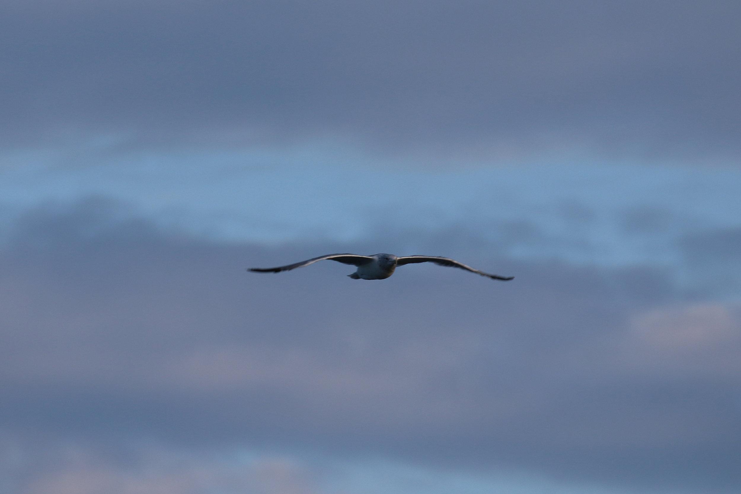 A gull enjoying the show as well.