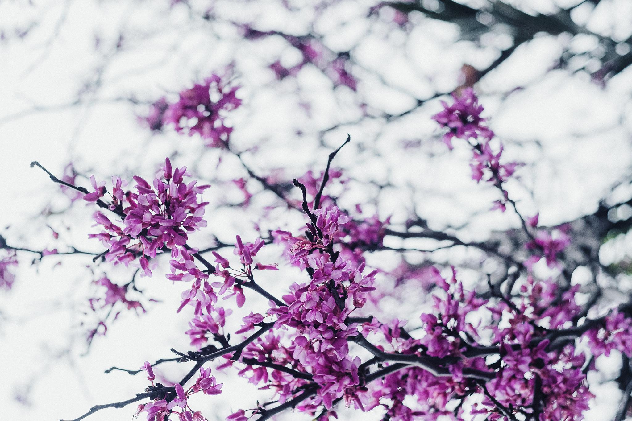 388_Floral [by @OsseGrecaSinare]_Blog.jpg