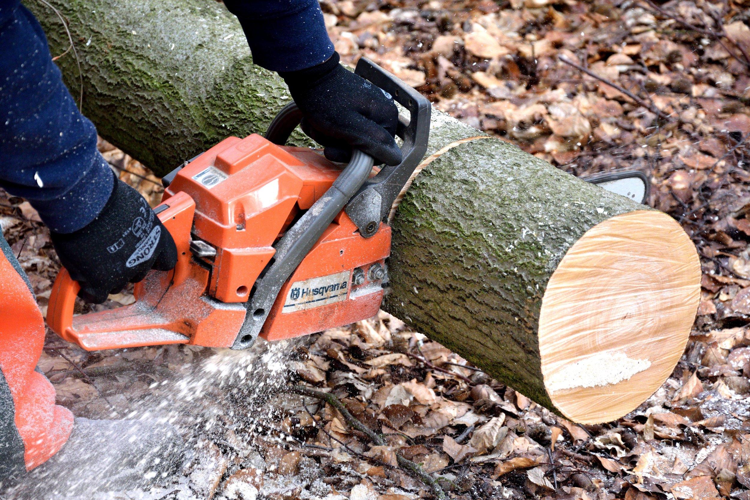 cutting-wood-2146507.jpg