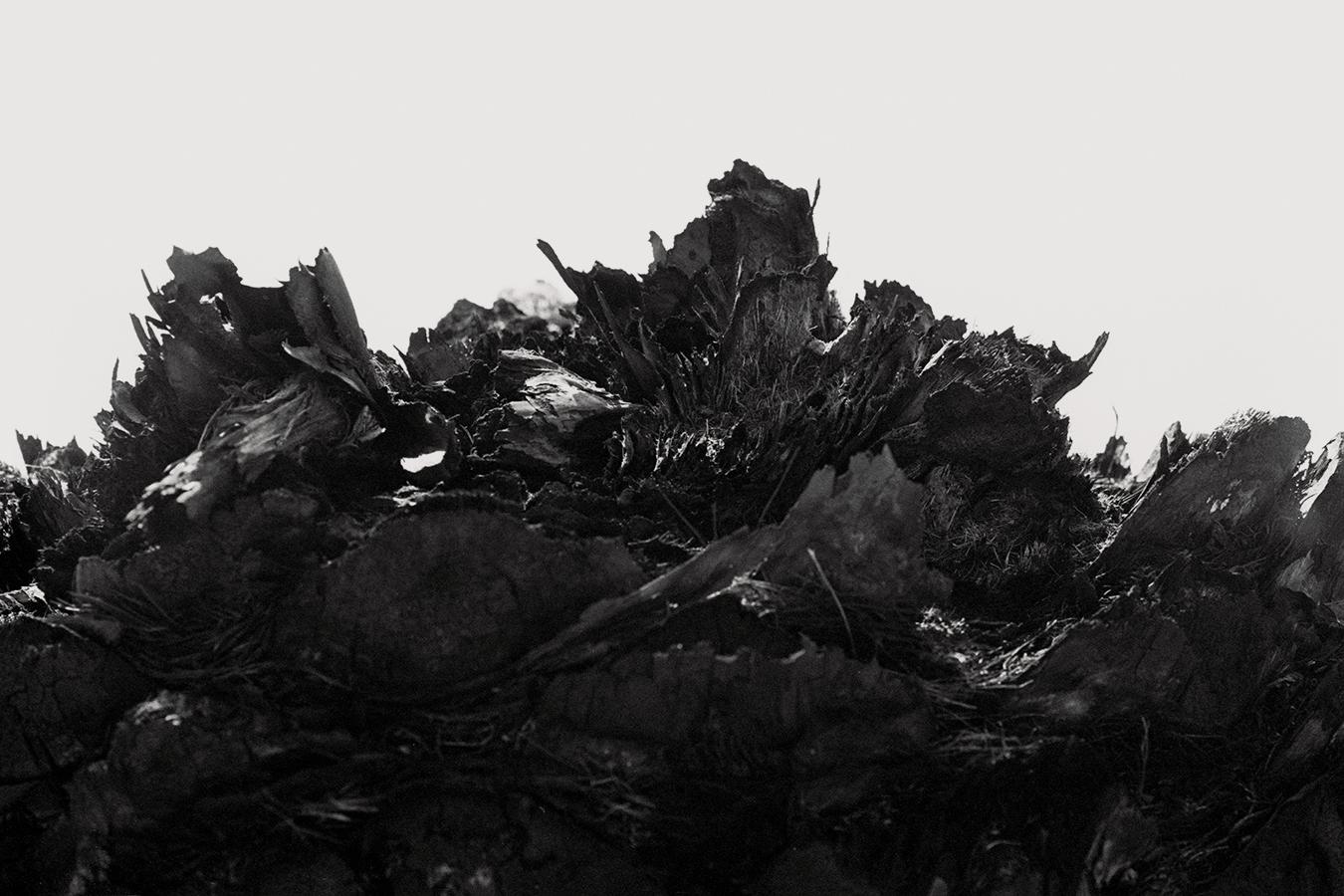 dried_leaves.jpg