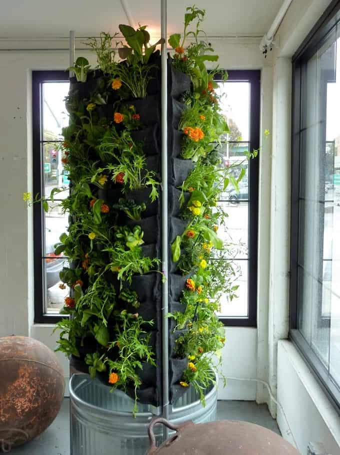 1-indoor-vertical-vegetable-garden.jpg