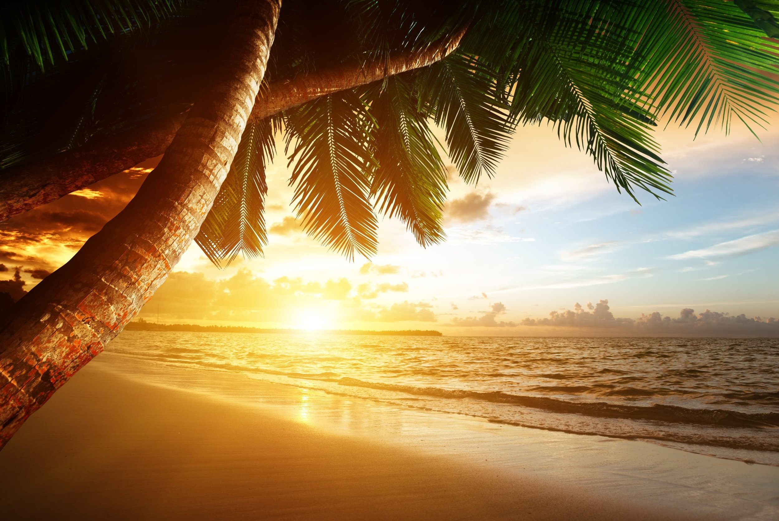 Palm Tree and Beach.jpg