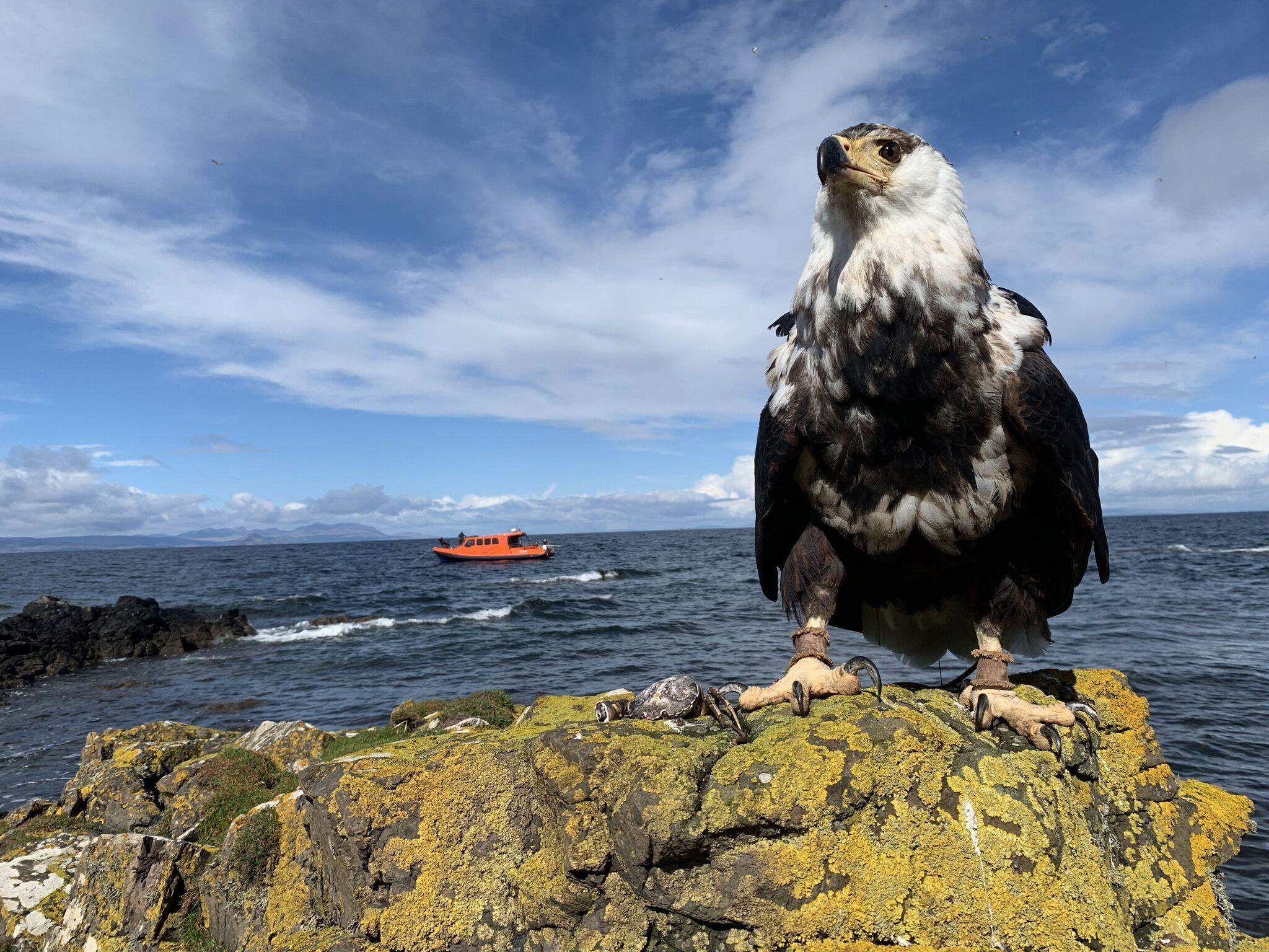 Glenapp Castle Hebridean Sea Safari Image .jpeg