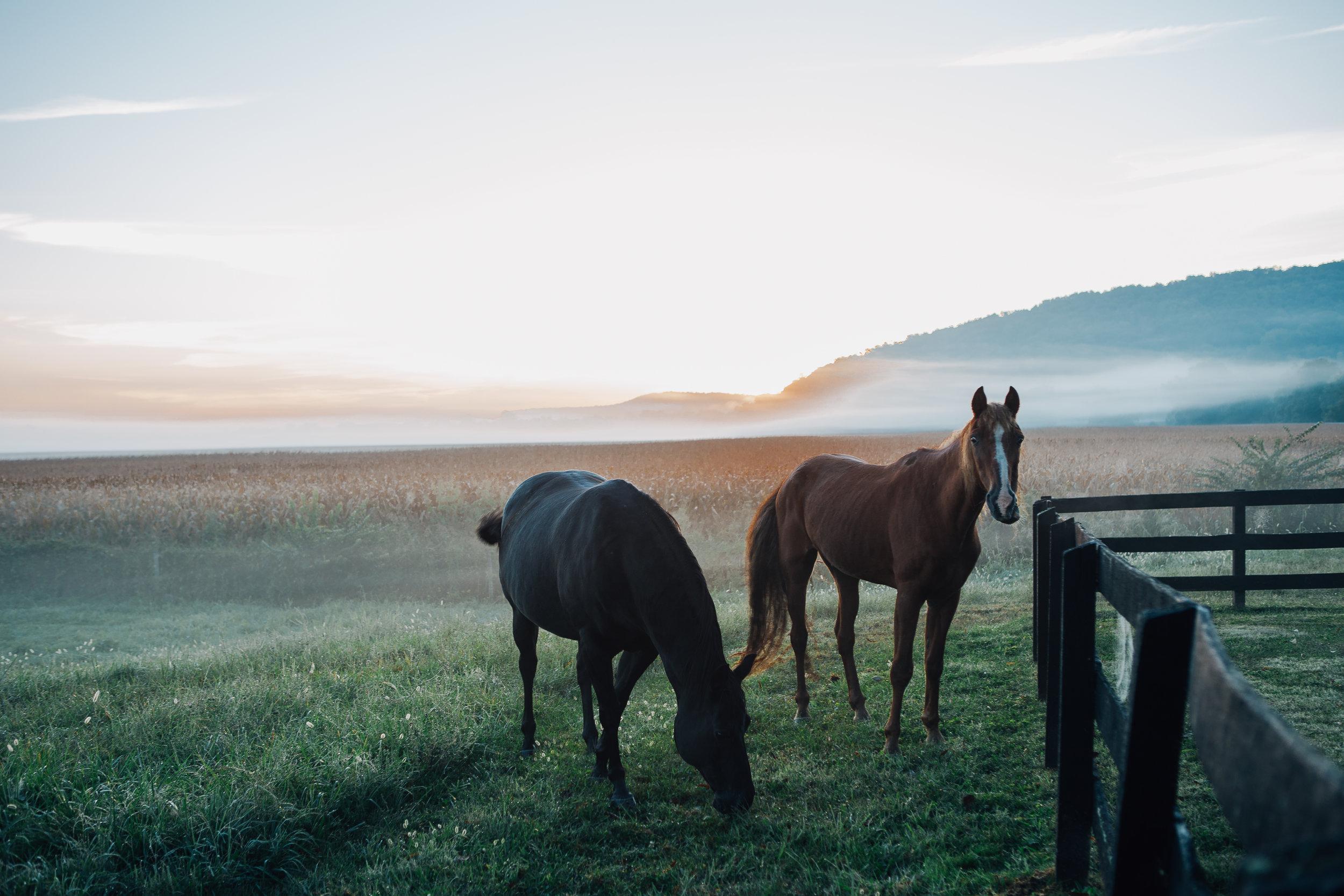 modest-farm-horses.jpg