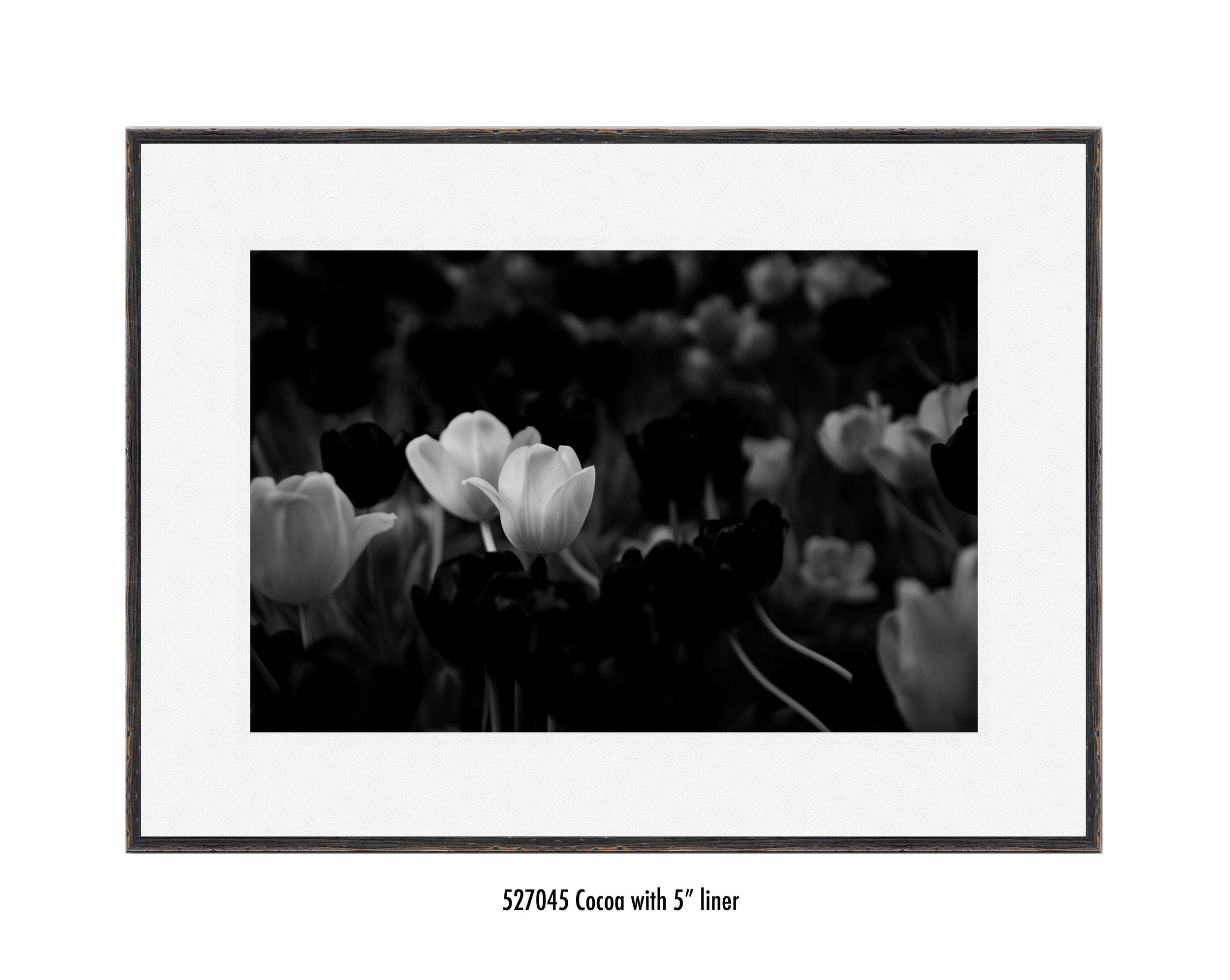 White-Flower-527045-5-wht.jpg