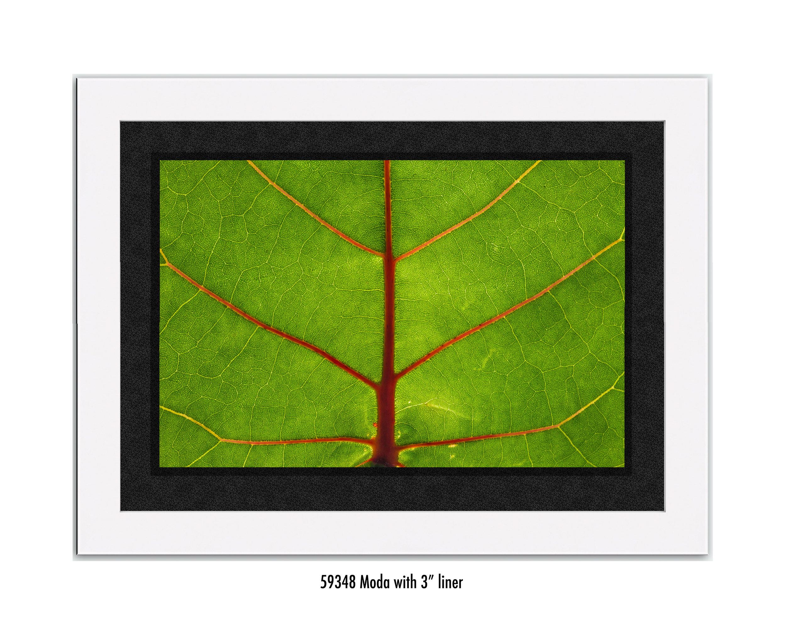 Leaf-59348-3-wht.jpg