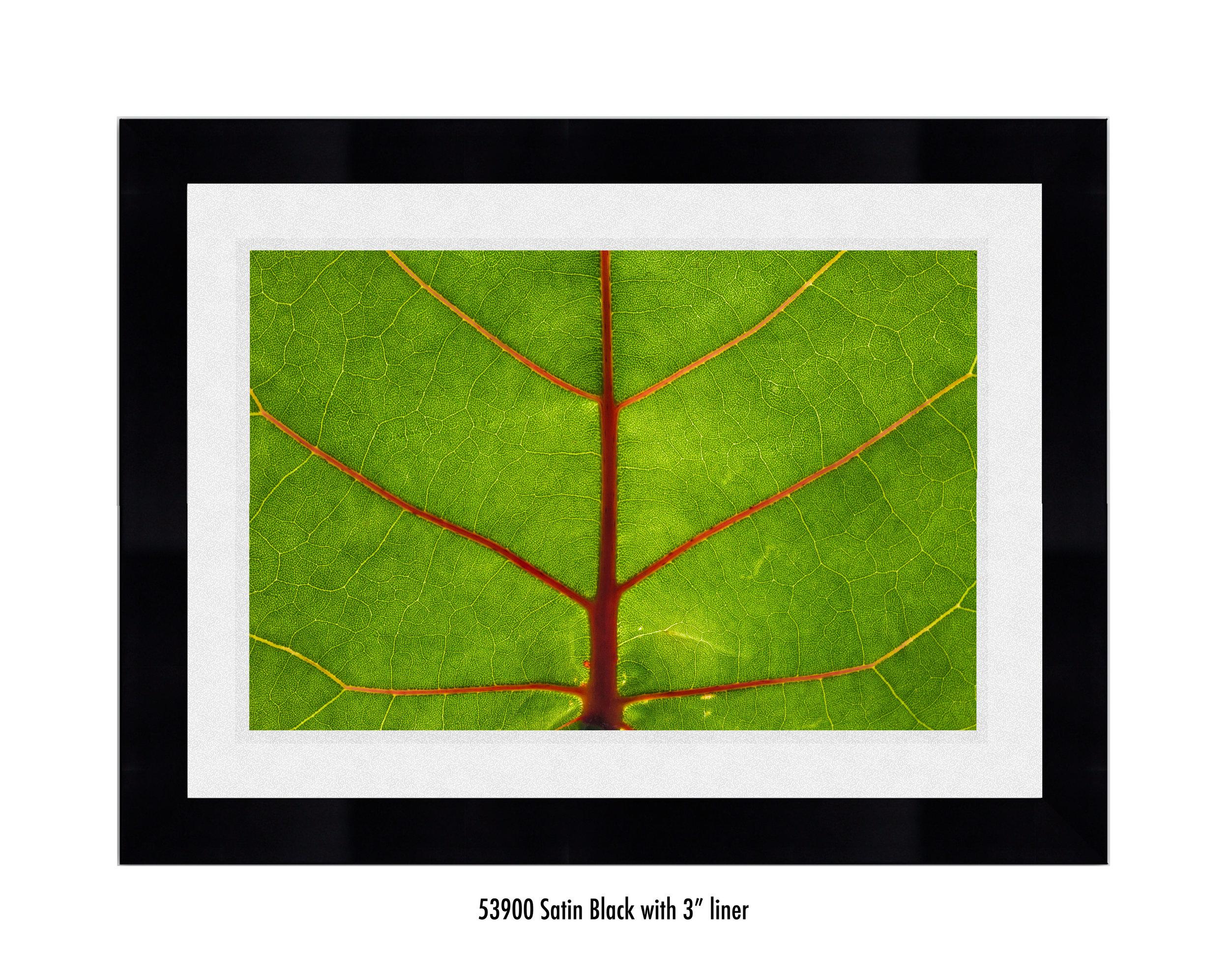 Leaf-59300-3-wht.jpg