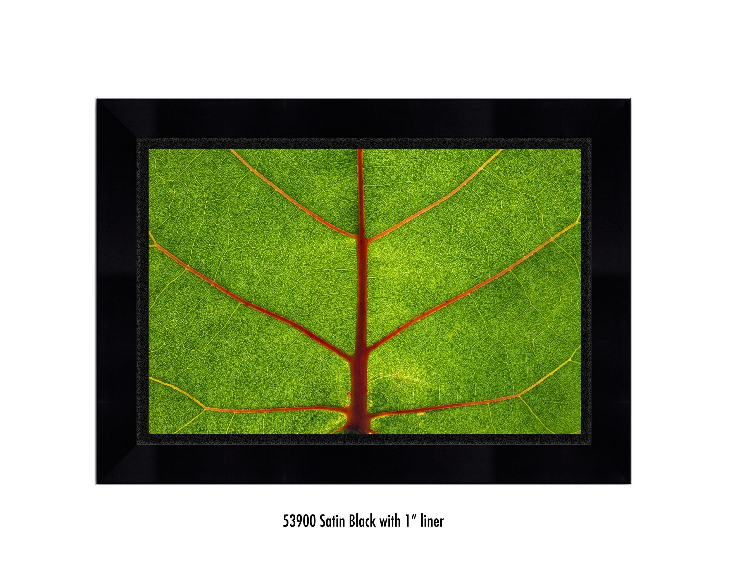Leaf-59300-1-blk.jpg