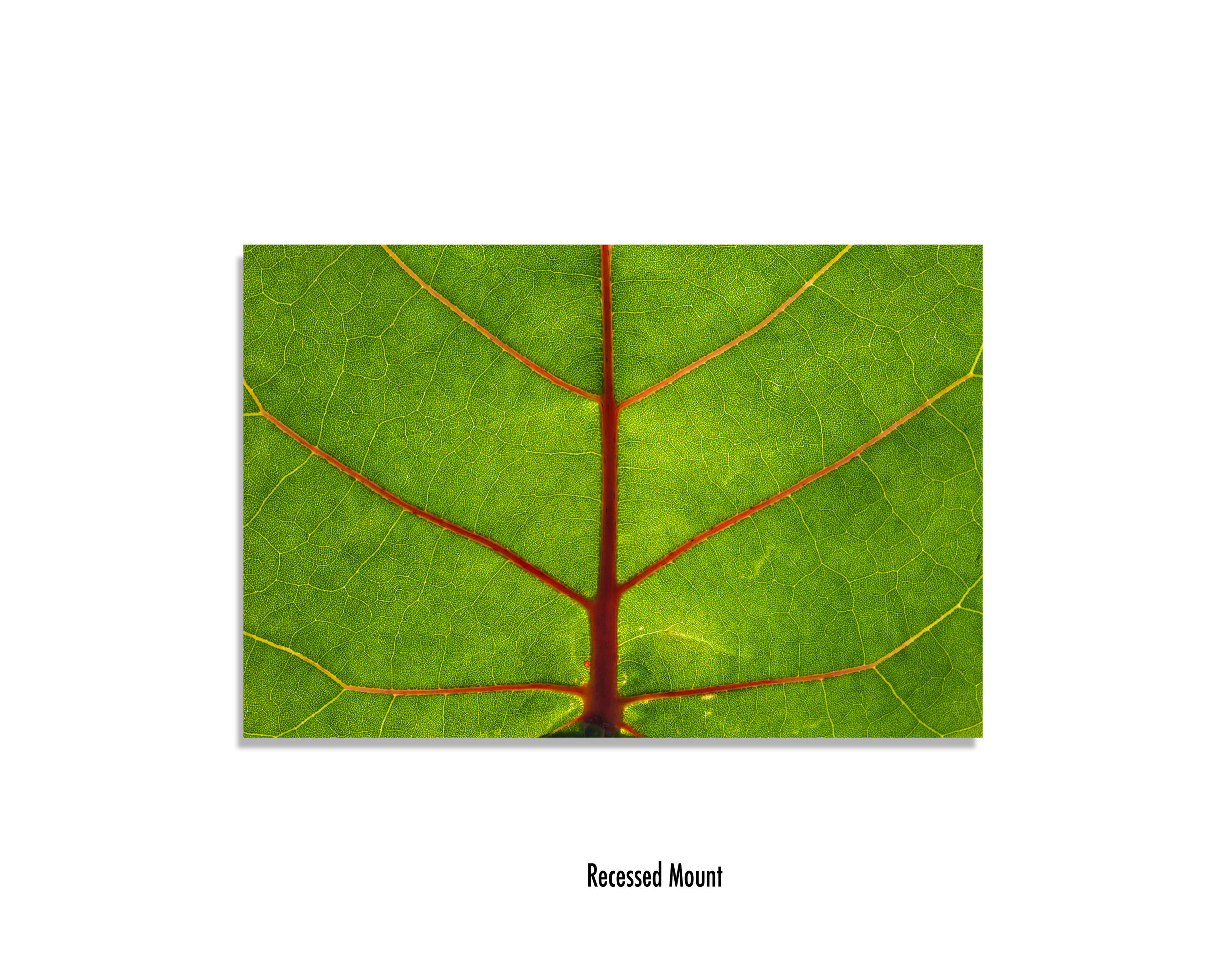 Leaf-recesed-mount.jpg