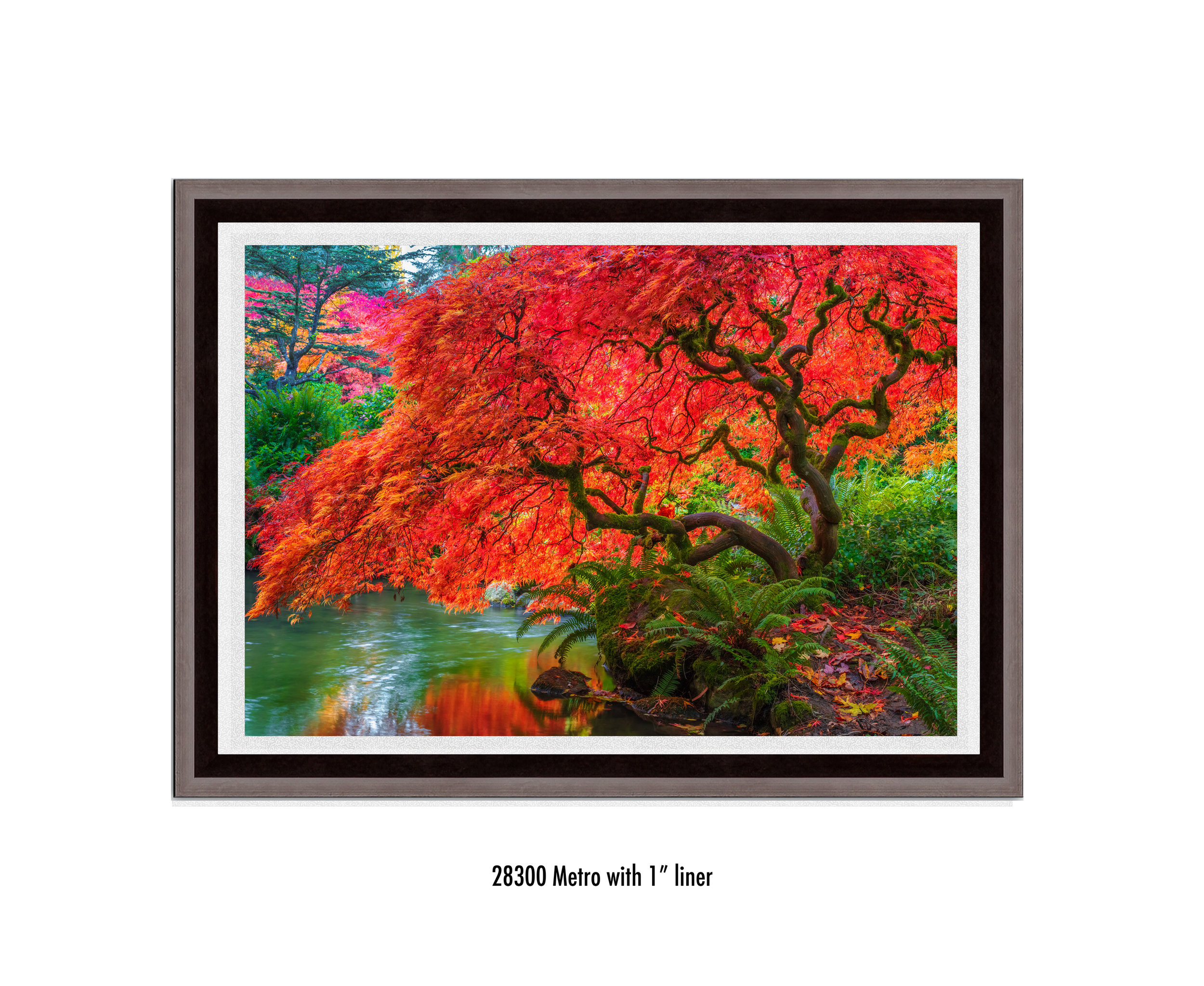 Tree-of-Fire-28300-1-wht.jpg