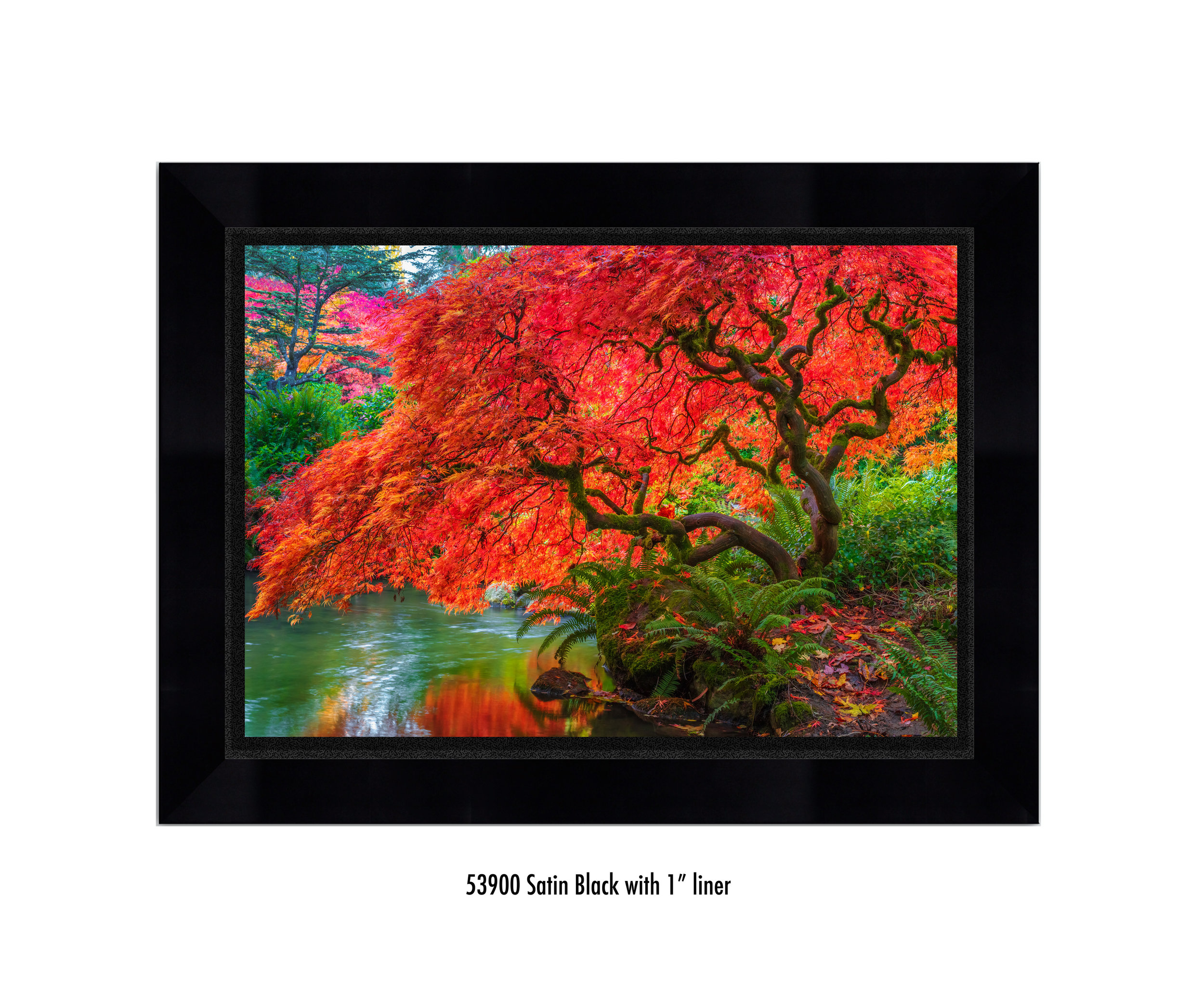 Tree-of-Fire-59300-1-blk.jpg
