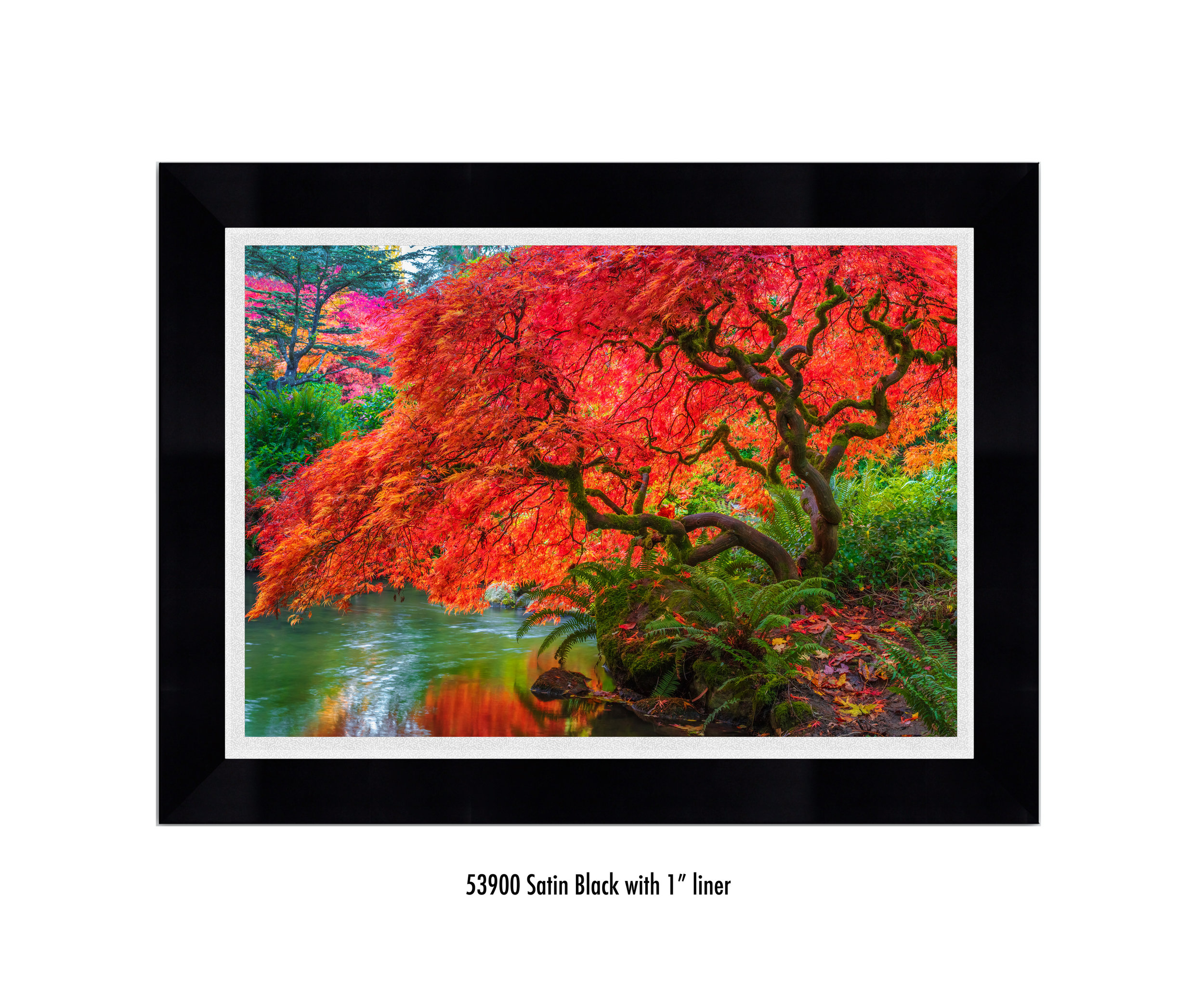 Tree-of-Fire-59300-1-wht.jpg