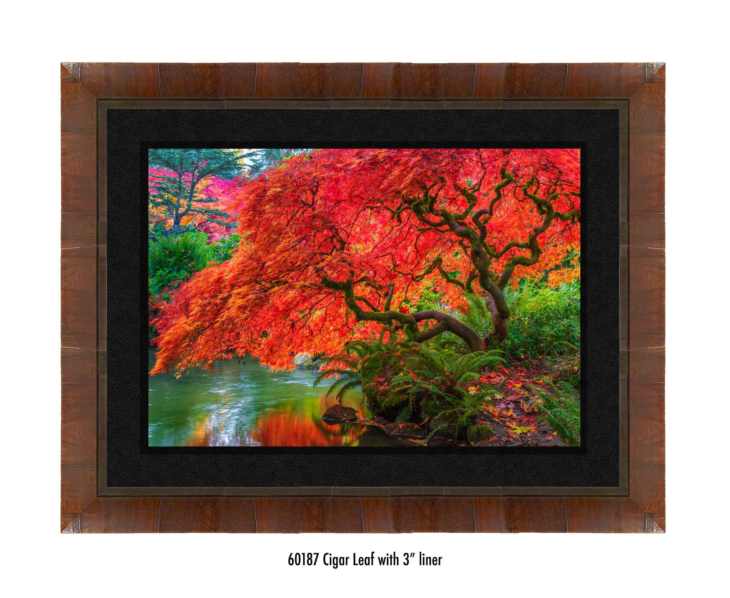 Tree-of-Fire-60187-3-blk.jpg