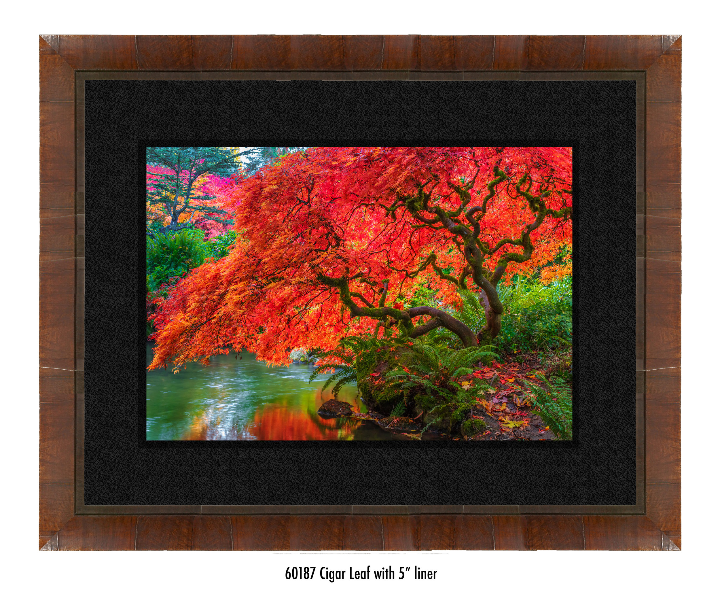 Tree-of-Fire-60187-5-blk.jpg