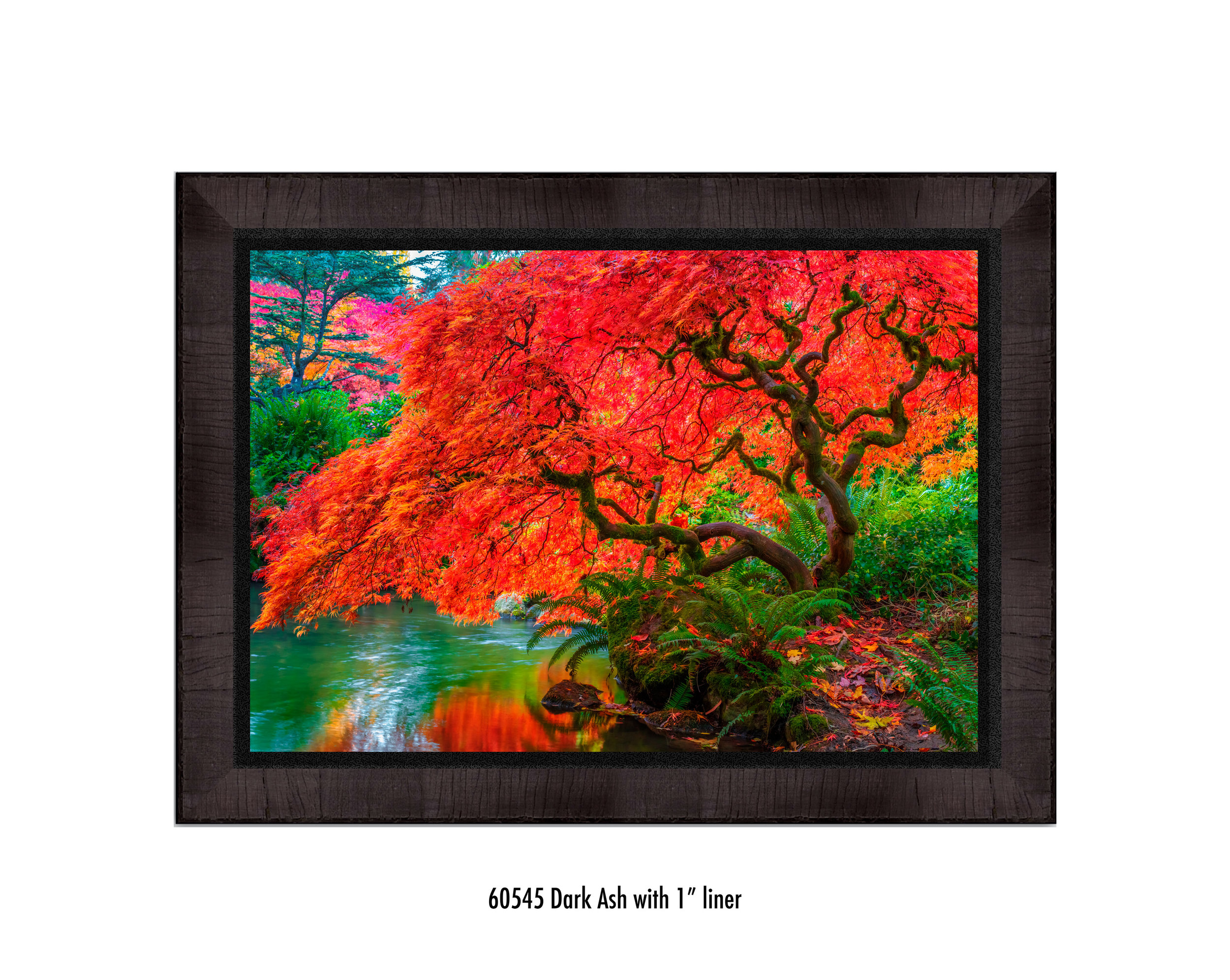 Tree-of-Fire-60545-1-blk.jpg