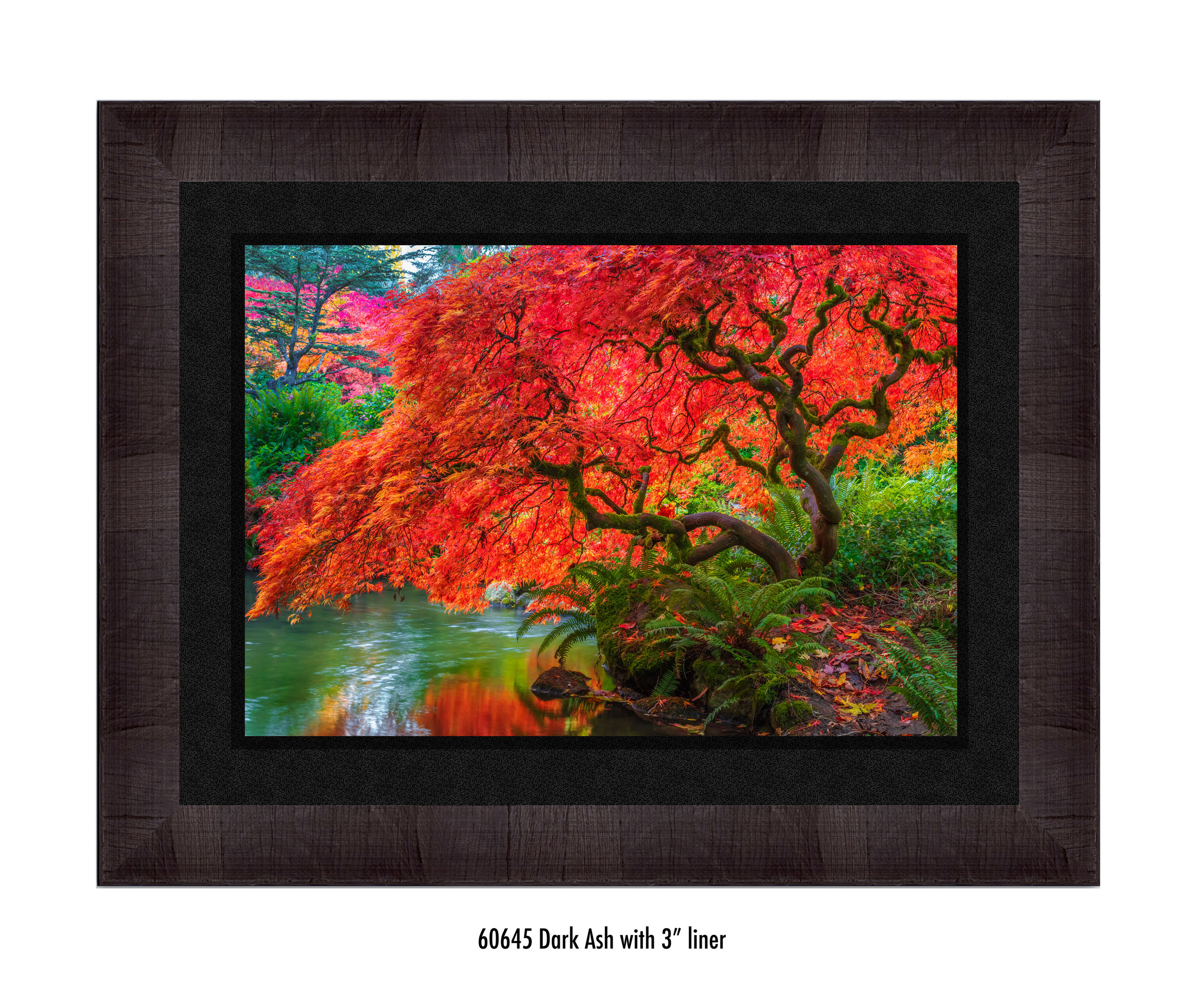 Tree-of-Fire-60645-3-blk.jpg