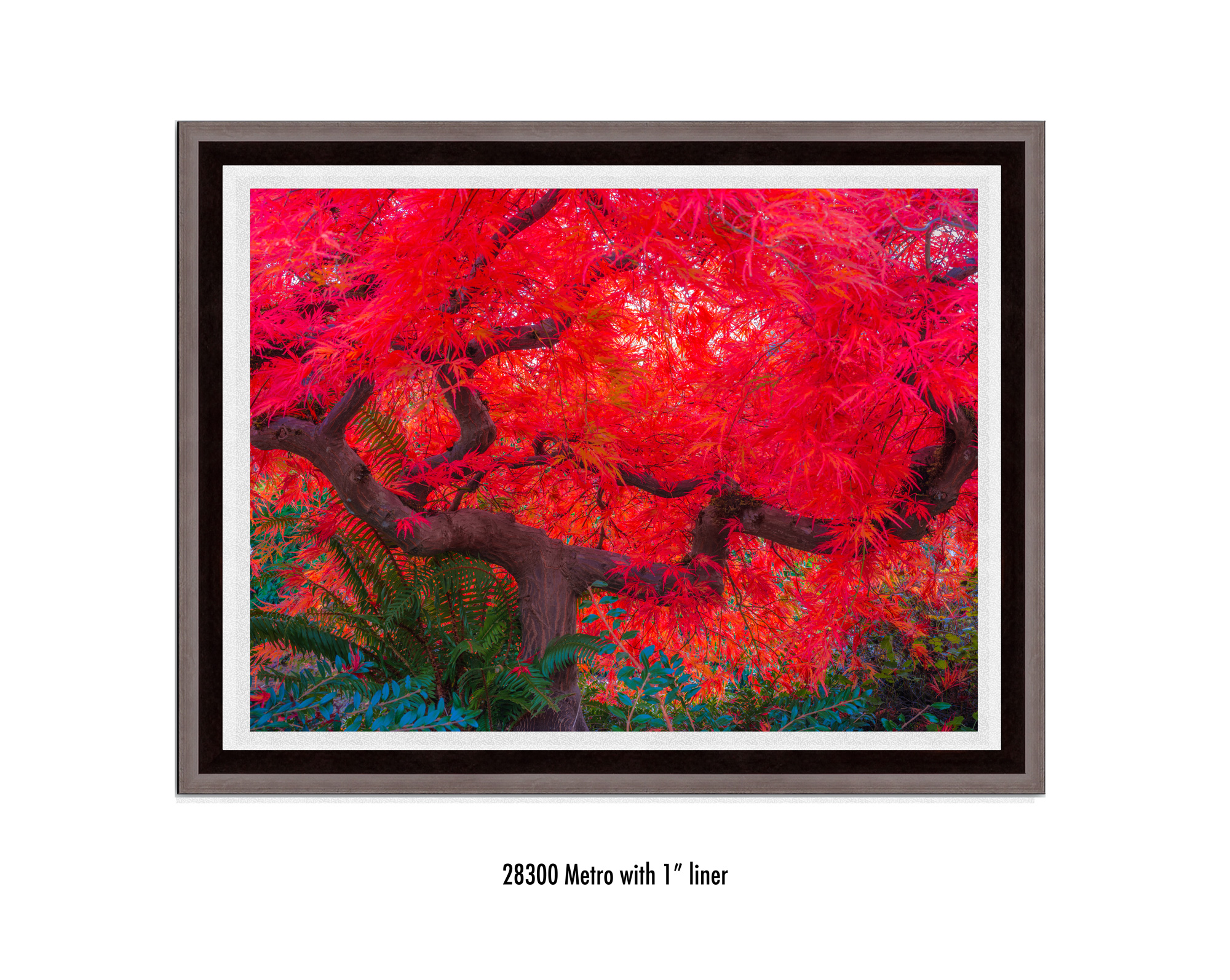 Scarlet-Tree-28300-1-wht.jpg
