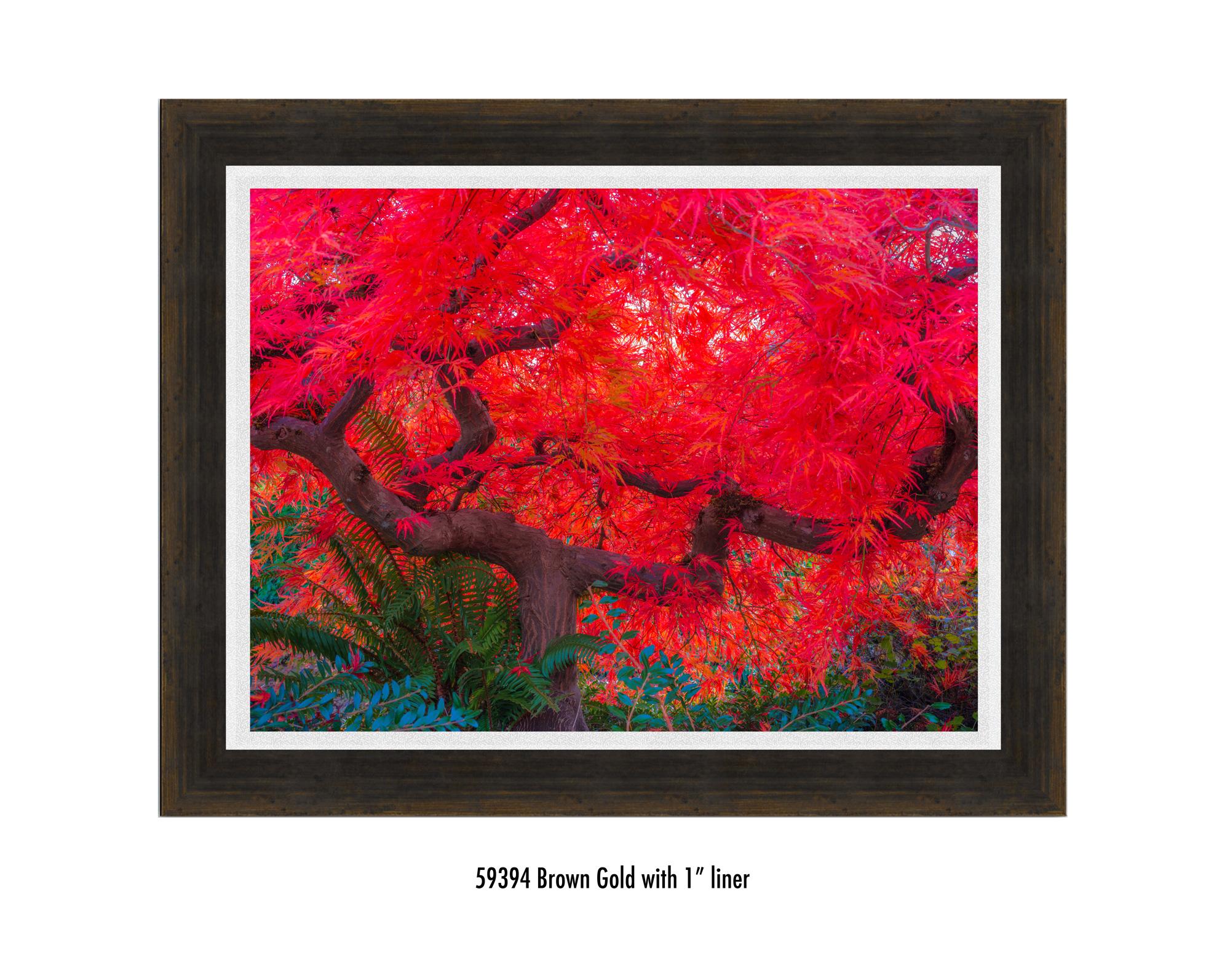 Scarlet-Tree-59394-1-wht.jpg