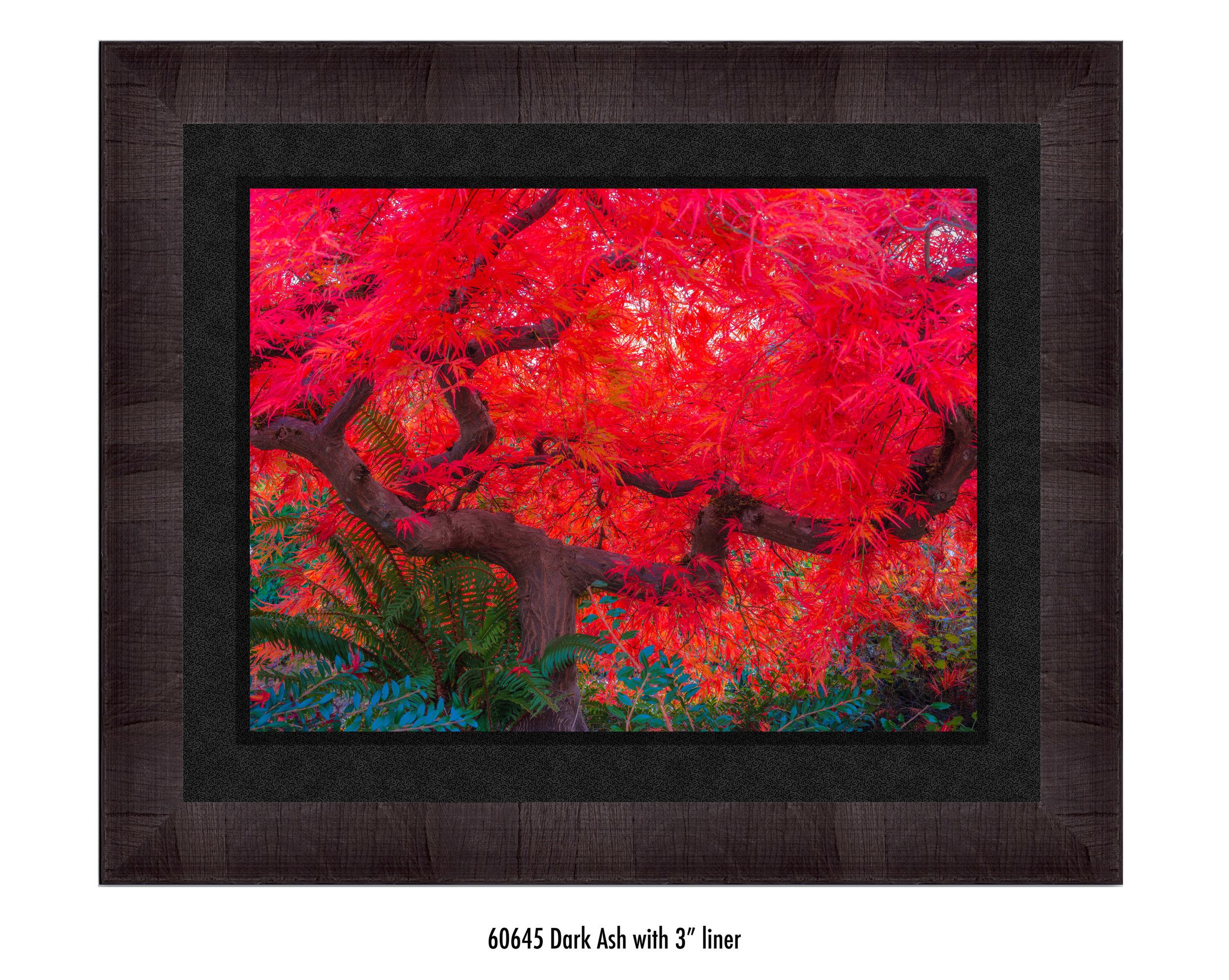 Scarlet-Tree-60645-3-blk.jpg