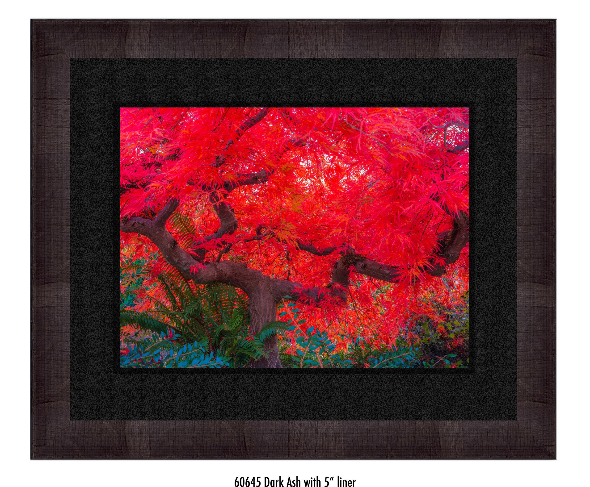 Scarlet-Tree-60645-5-blk.jpg