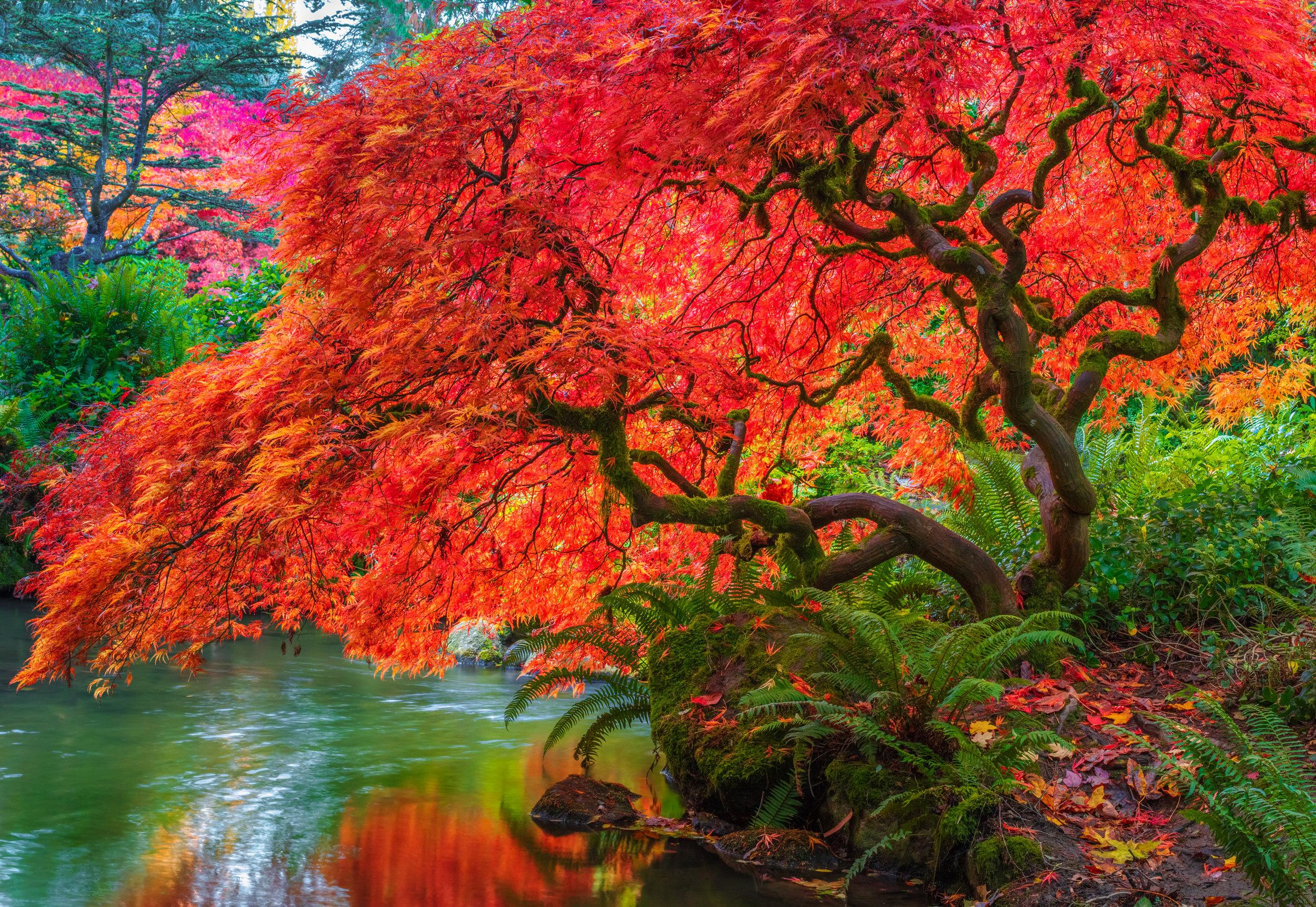 Tree-Of-Fire.jpg