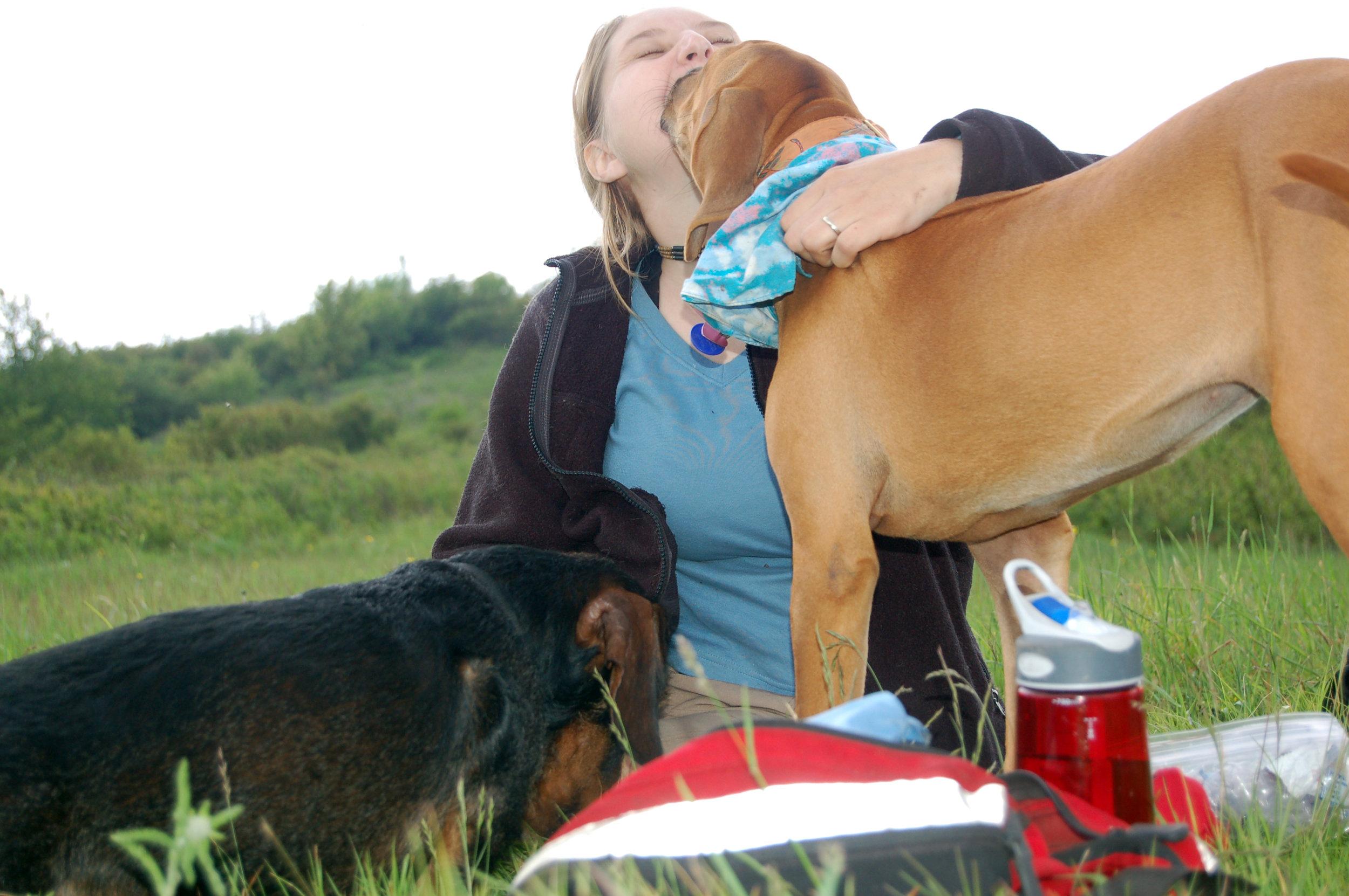 Dog Training Greenville SC