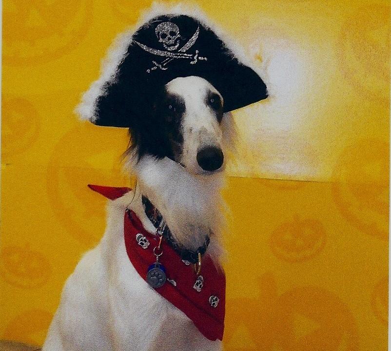 Savvy: Scirroco Horizon Captain Jack Sparrow CGC Silken Windhound