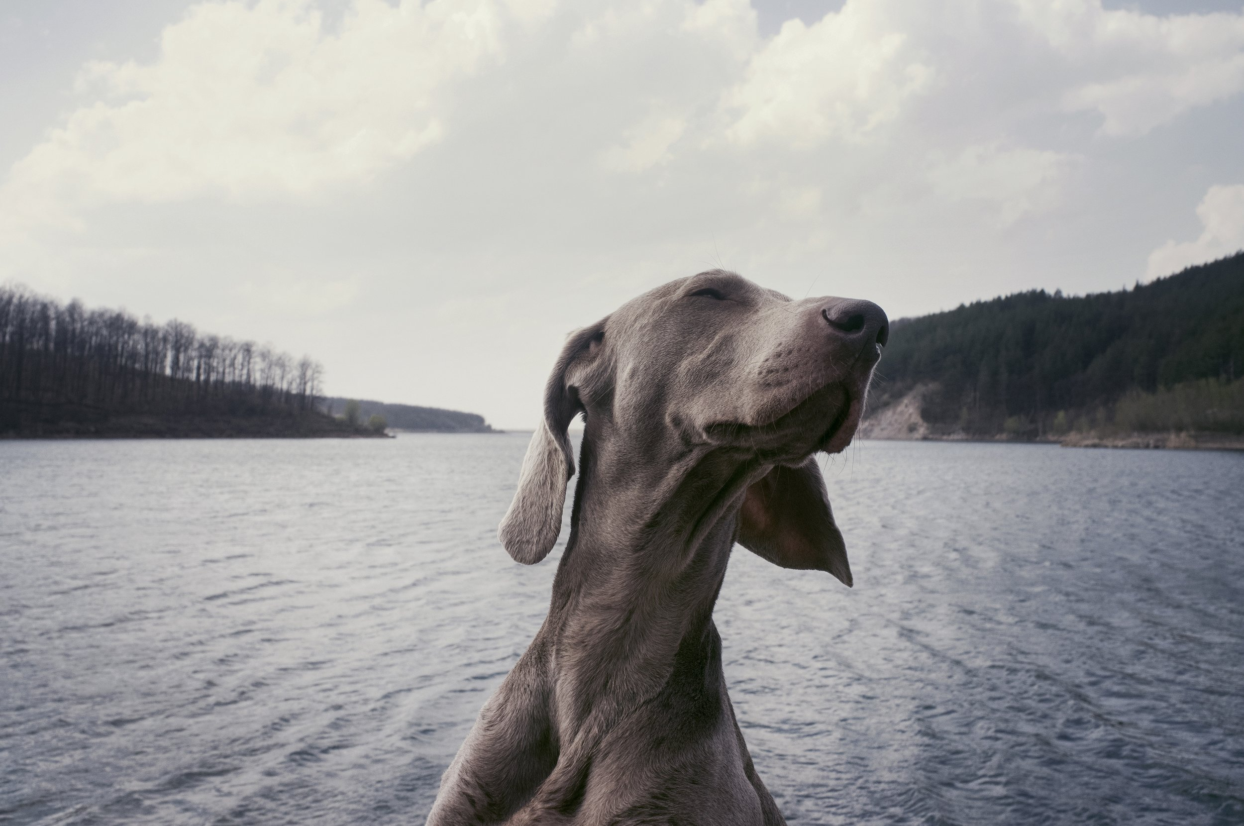 Guaranteed Dog Training