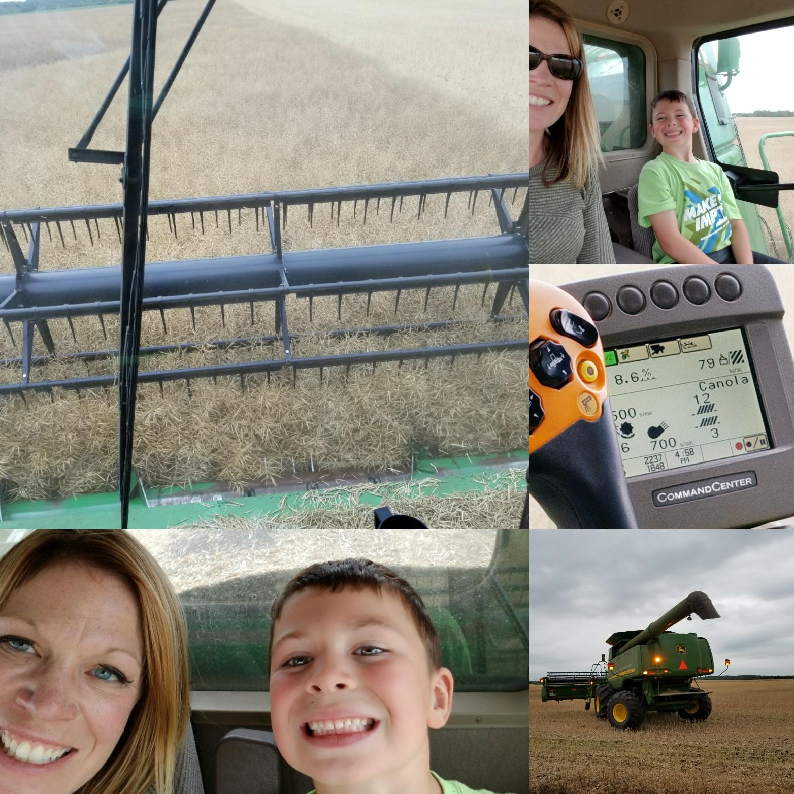 Straight cutting canola: Harvest 2017