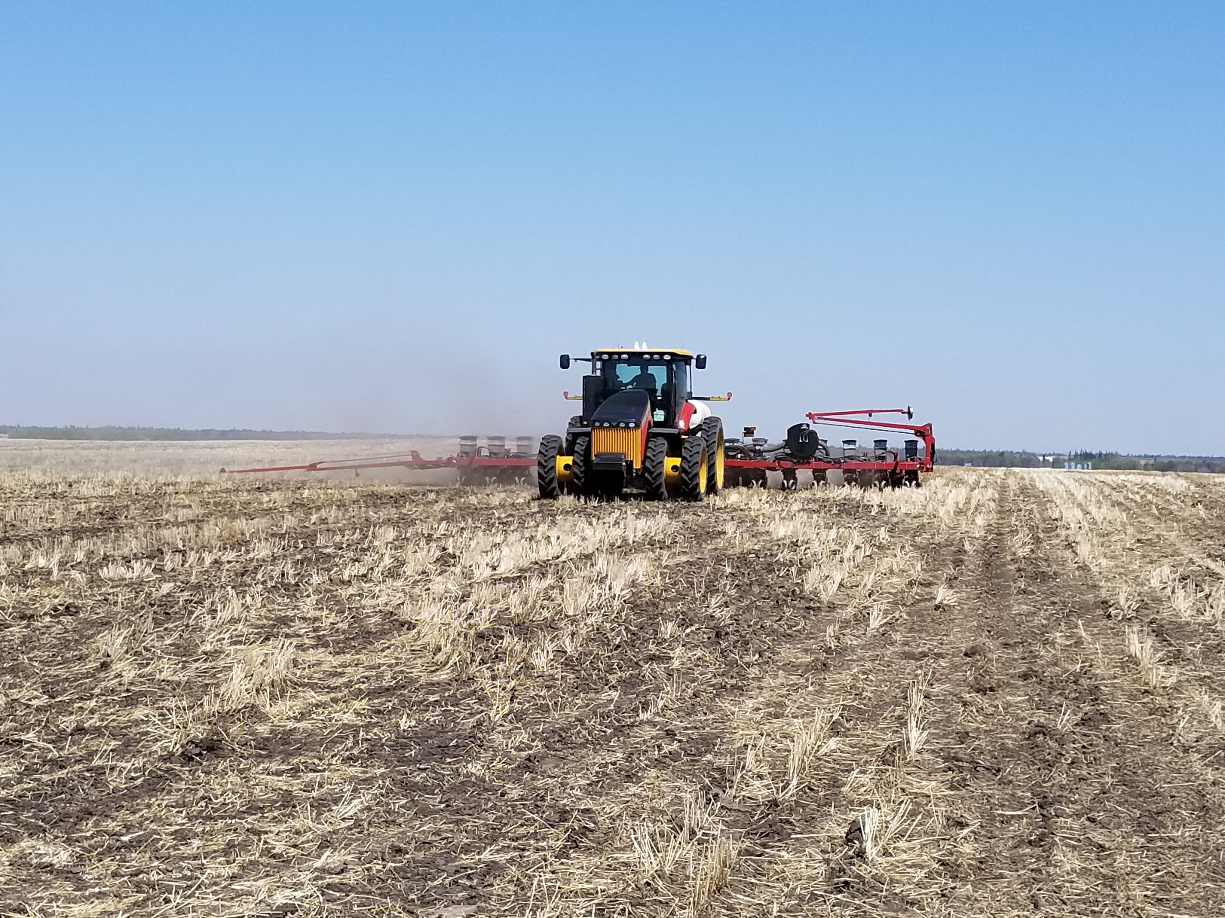 Planting sunflowers into cereal stubble.
