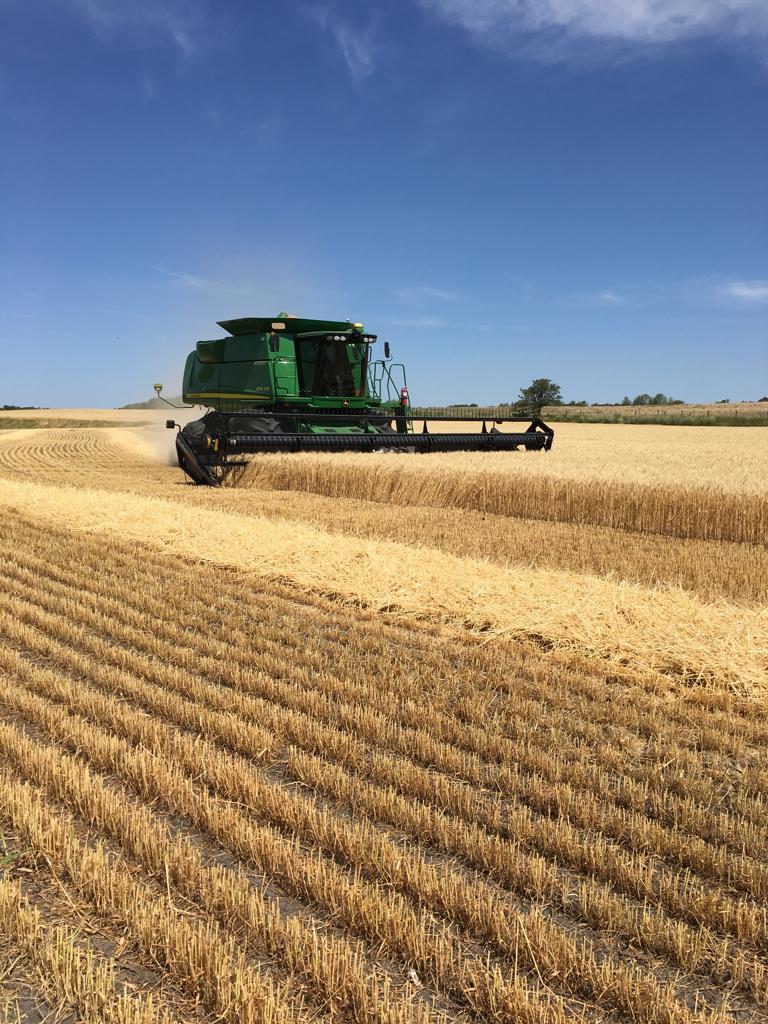 2019Harvest_JD_Wheat.jpg