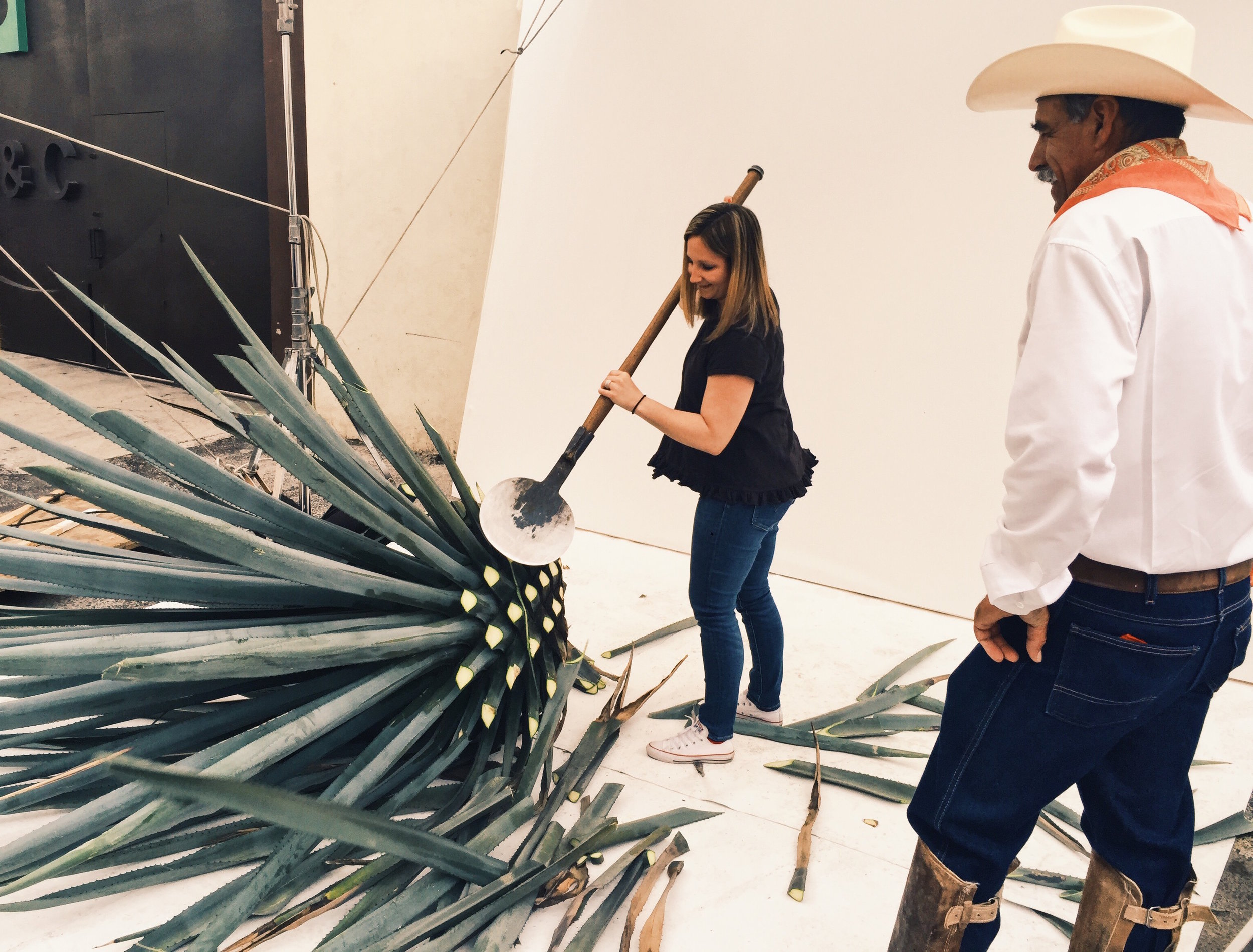 Learning how to cut an agave plant from master jimador Don Manuel from Patron.