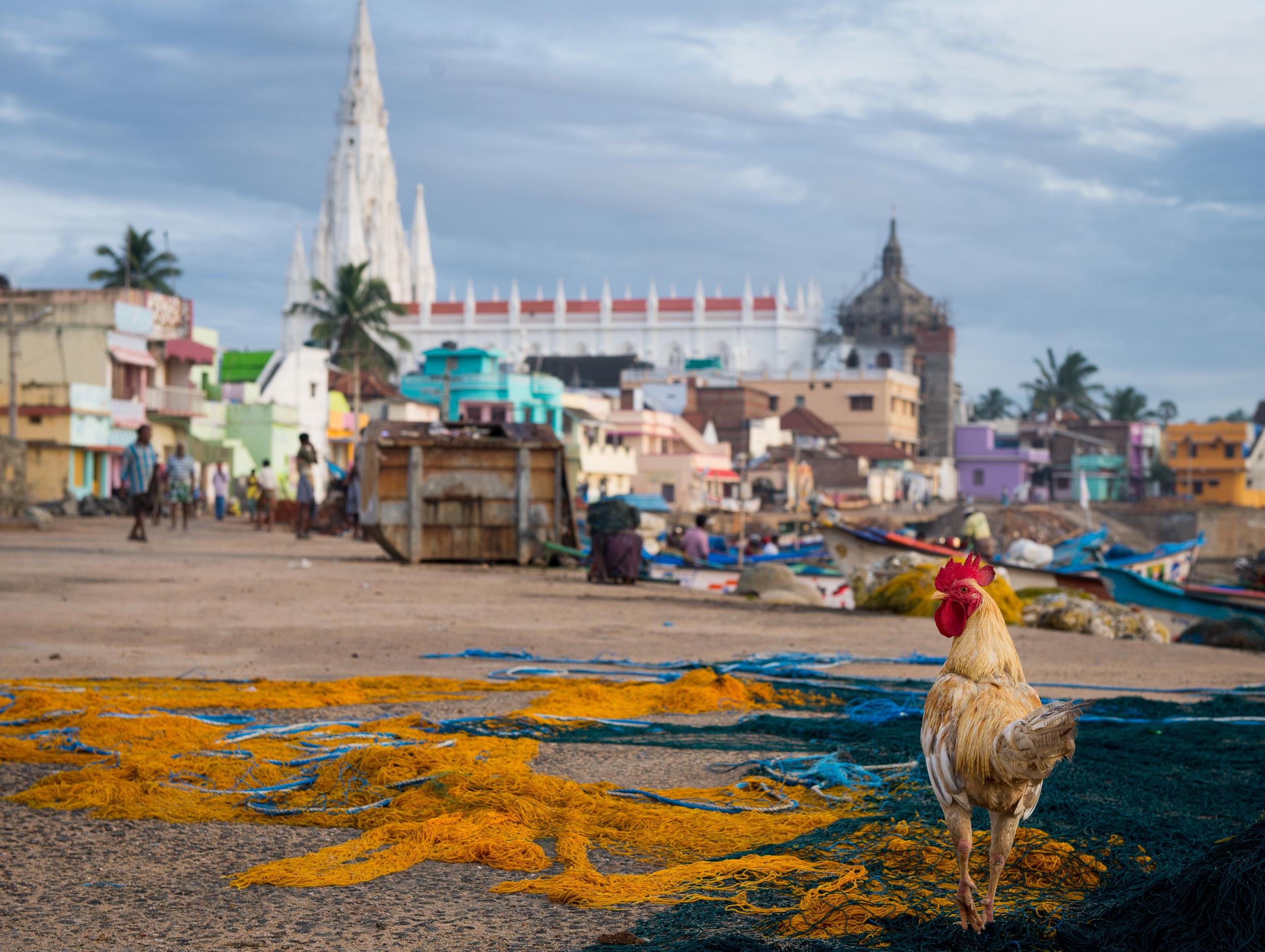 meyer-india-southeast-69.jpg