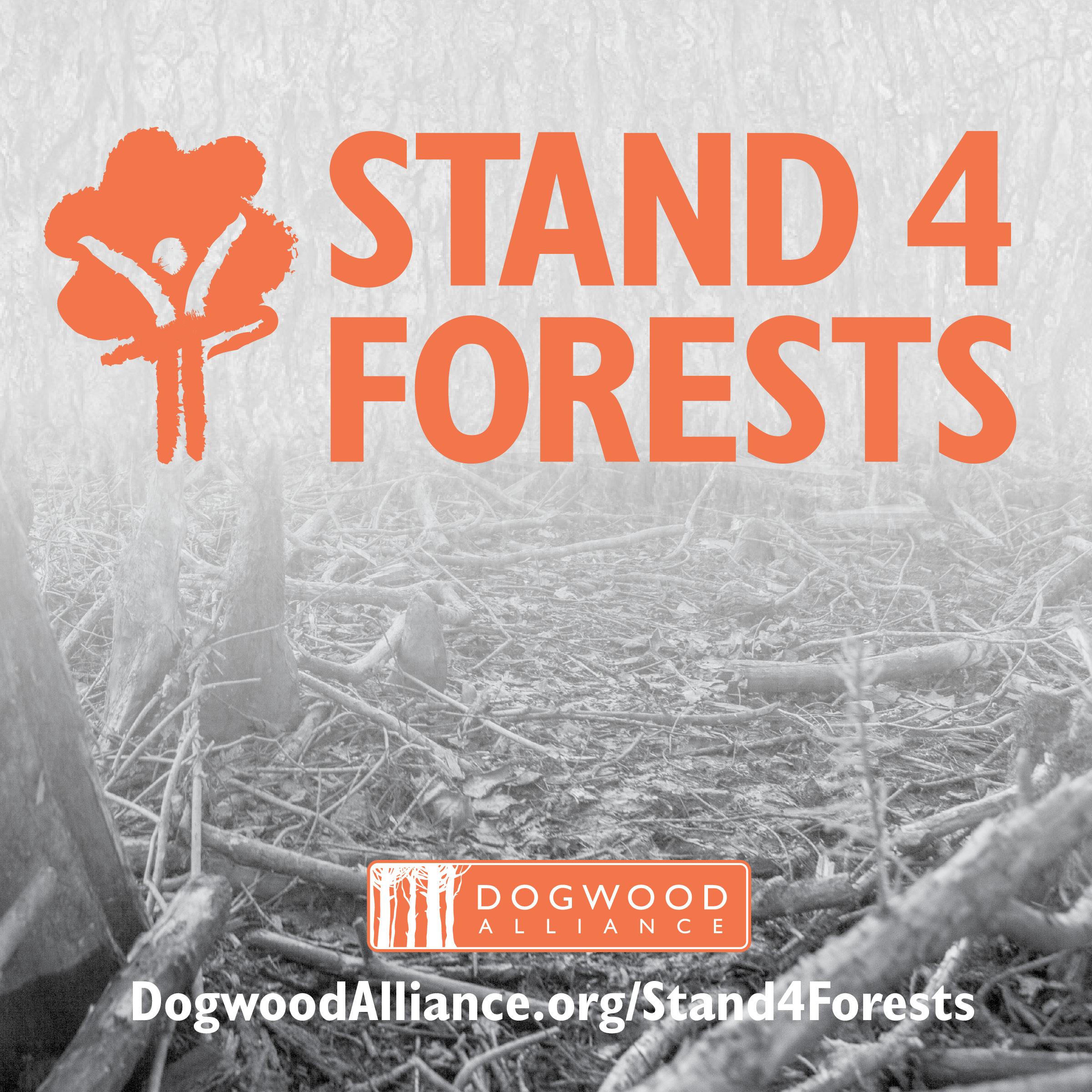 17-DWA-002_Stand4Forests_SocialMedia_v16.jpg