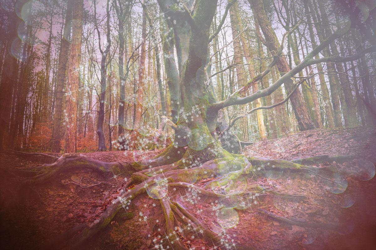 Athena-Matrix-Gaia-treeroots.jpg