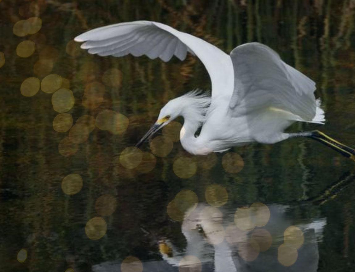 MagicOma-Crane-reflected2.jpg
