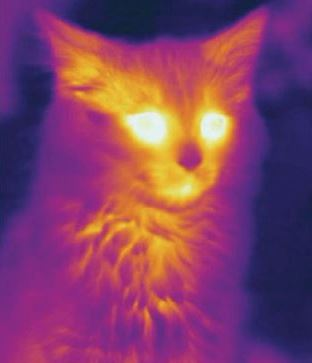 Why is this cat glowing?