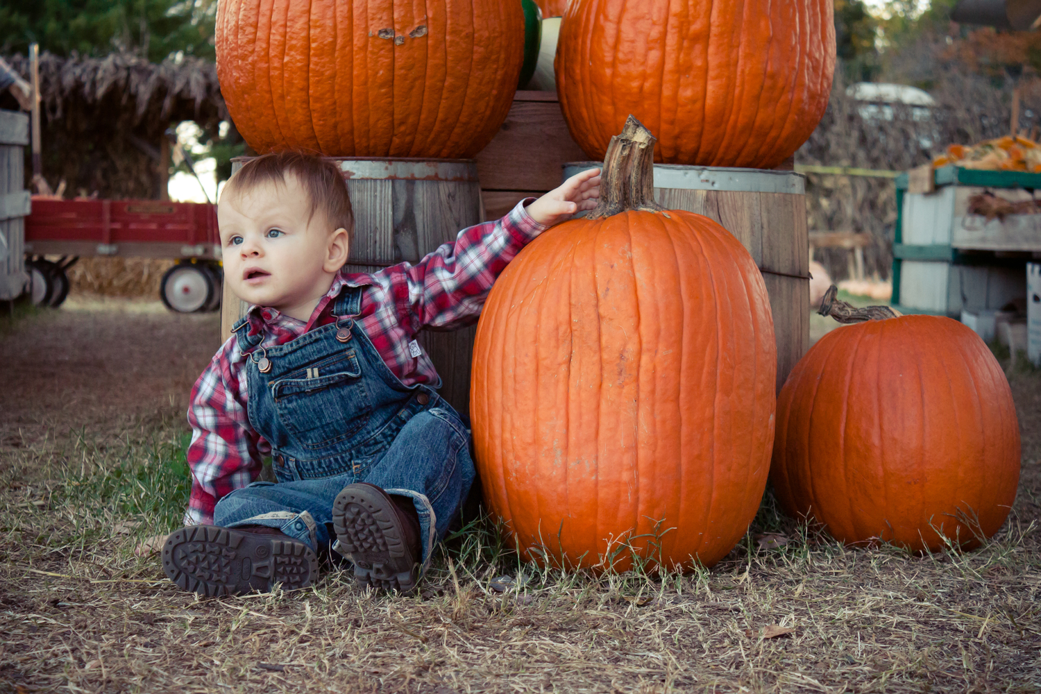 toddler with pumpkins