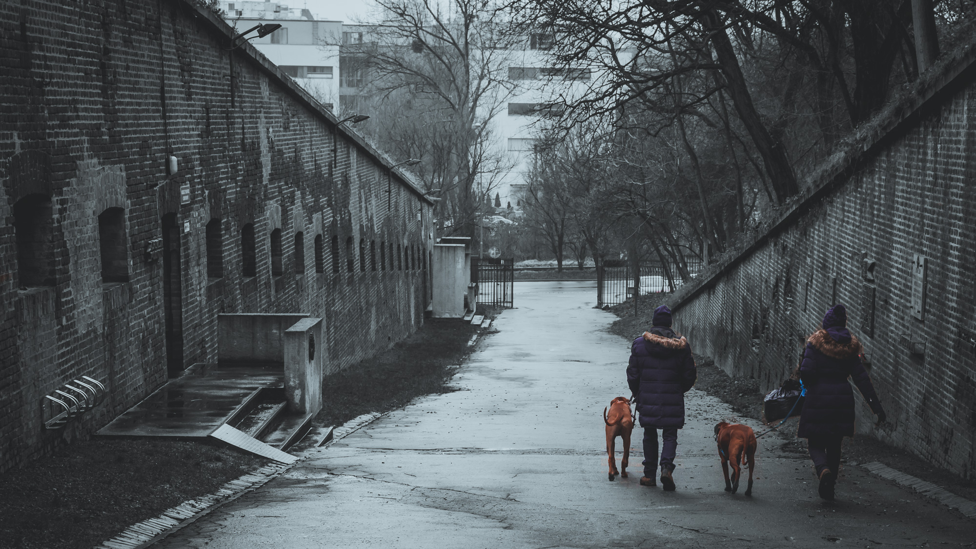 Dog-walkers in Poznan
