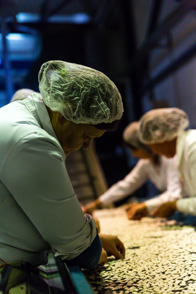 Bean factory workers