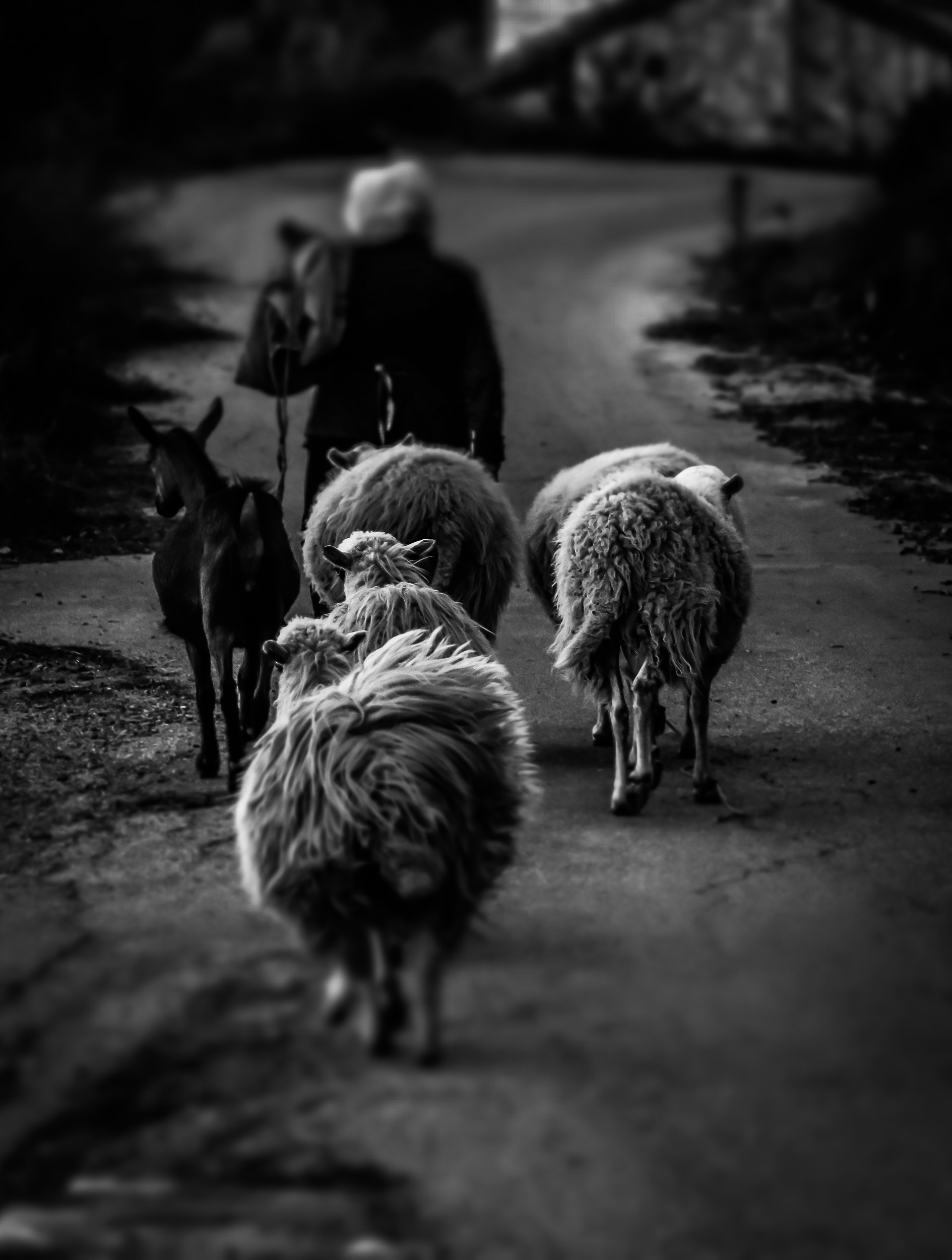photography-black-and-white-28-stemajourneys.com.jpg