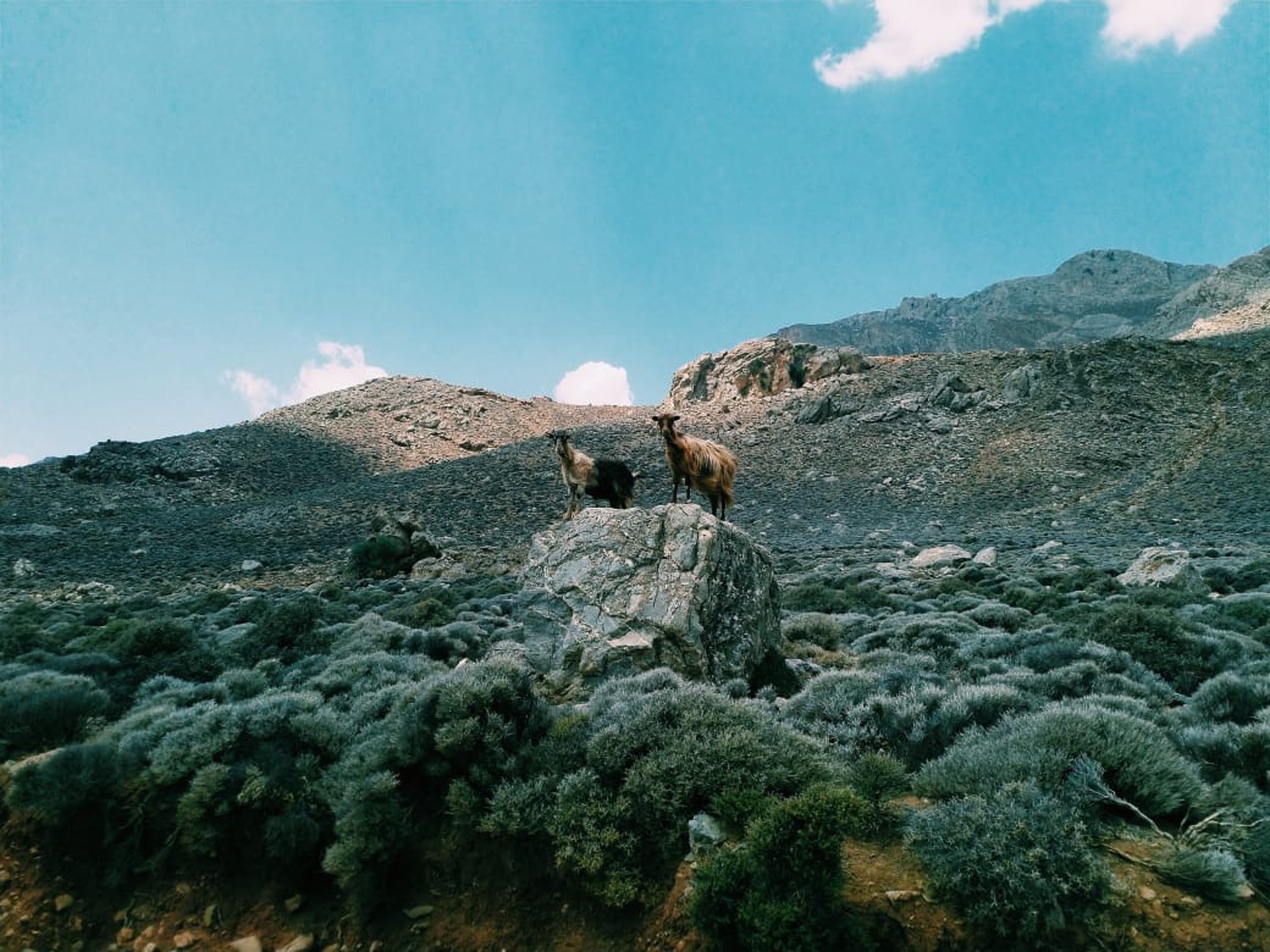 greek-shepherds-10-stemajourneys.com.jpg