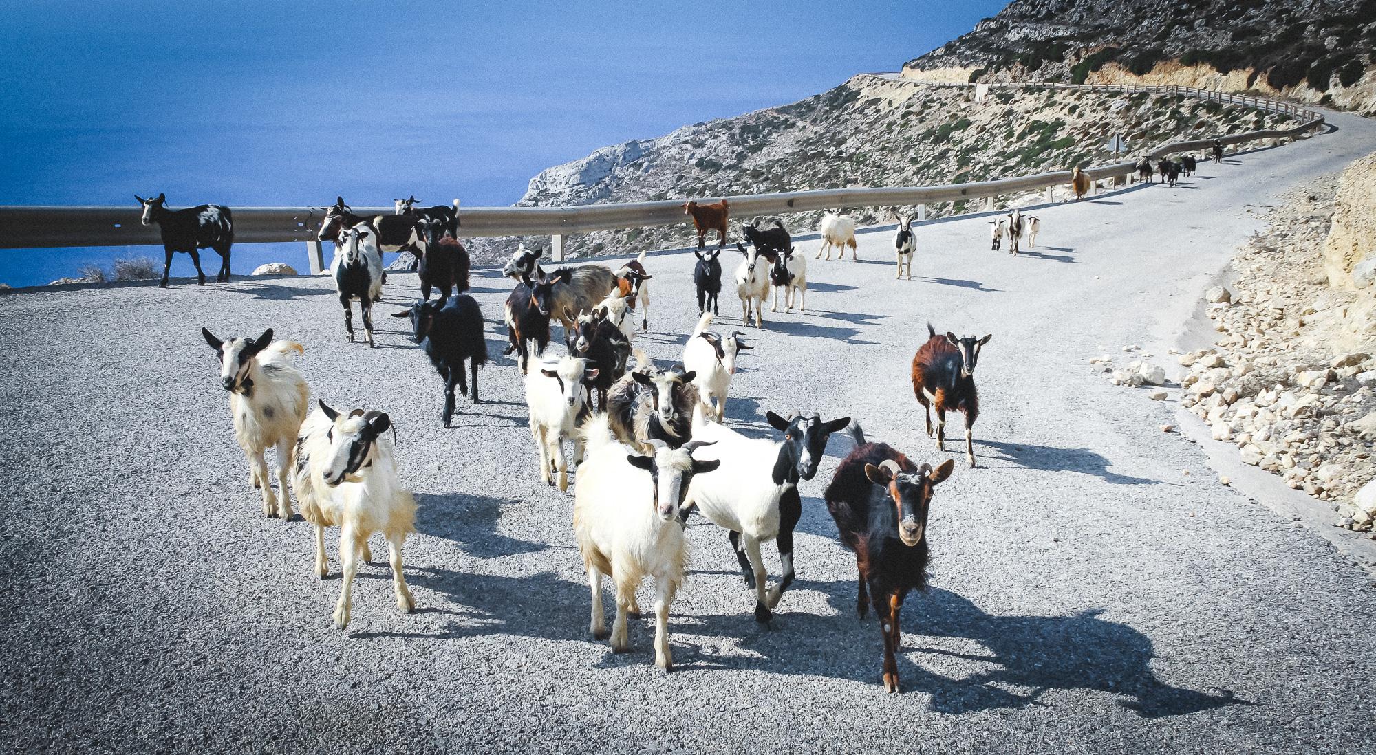 greek-shepherds-15-stemajourneys.com.jpg